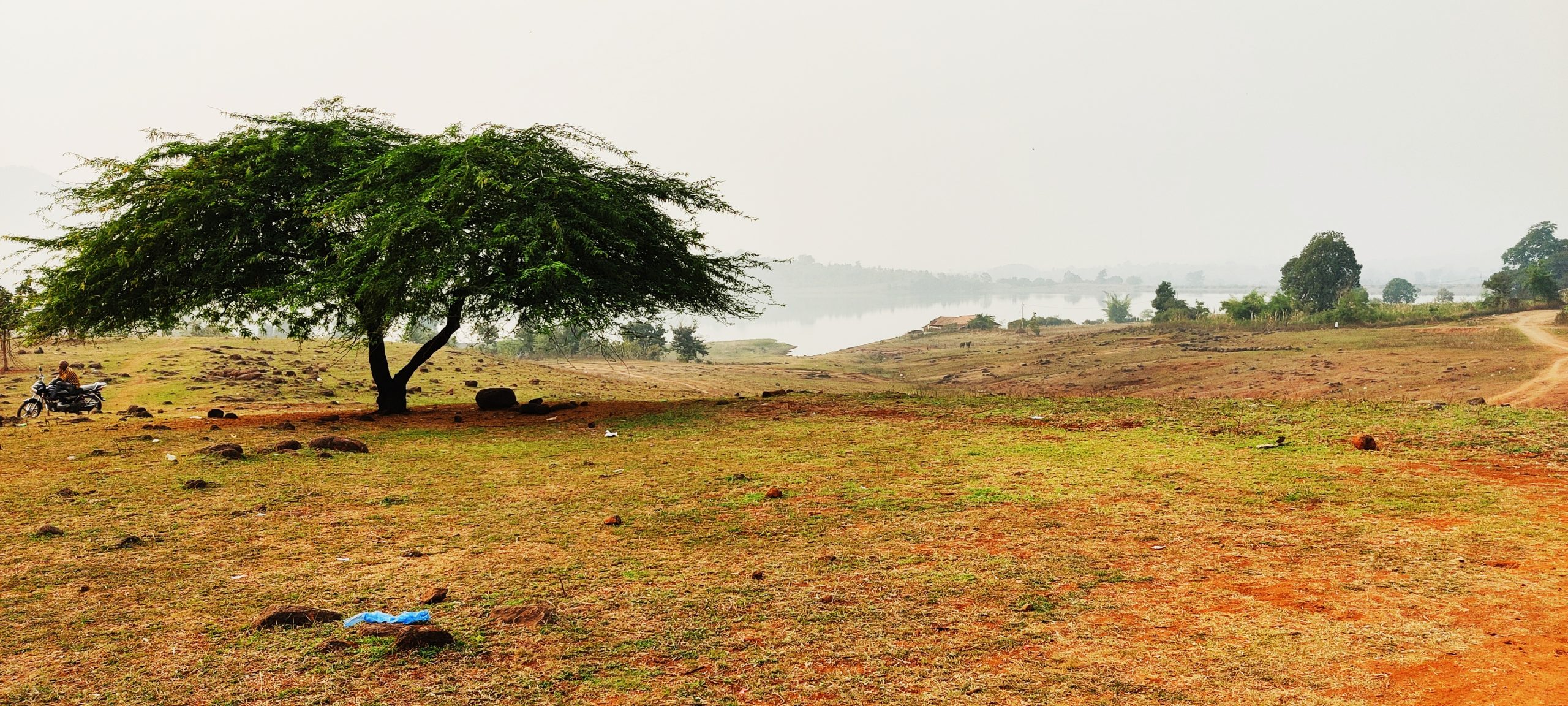 tree in a grassland