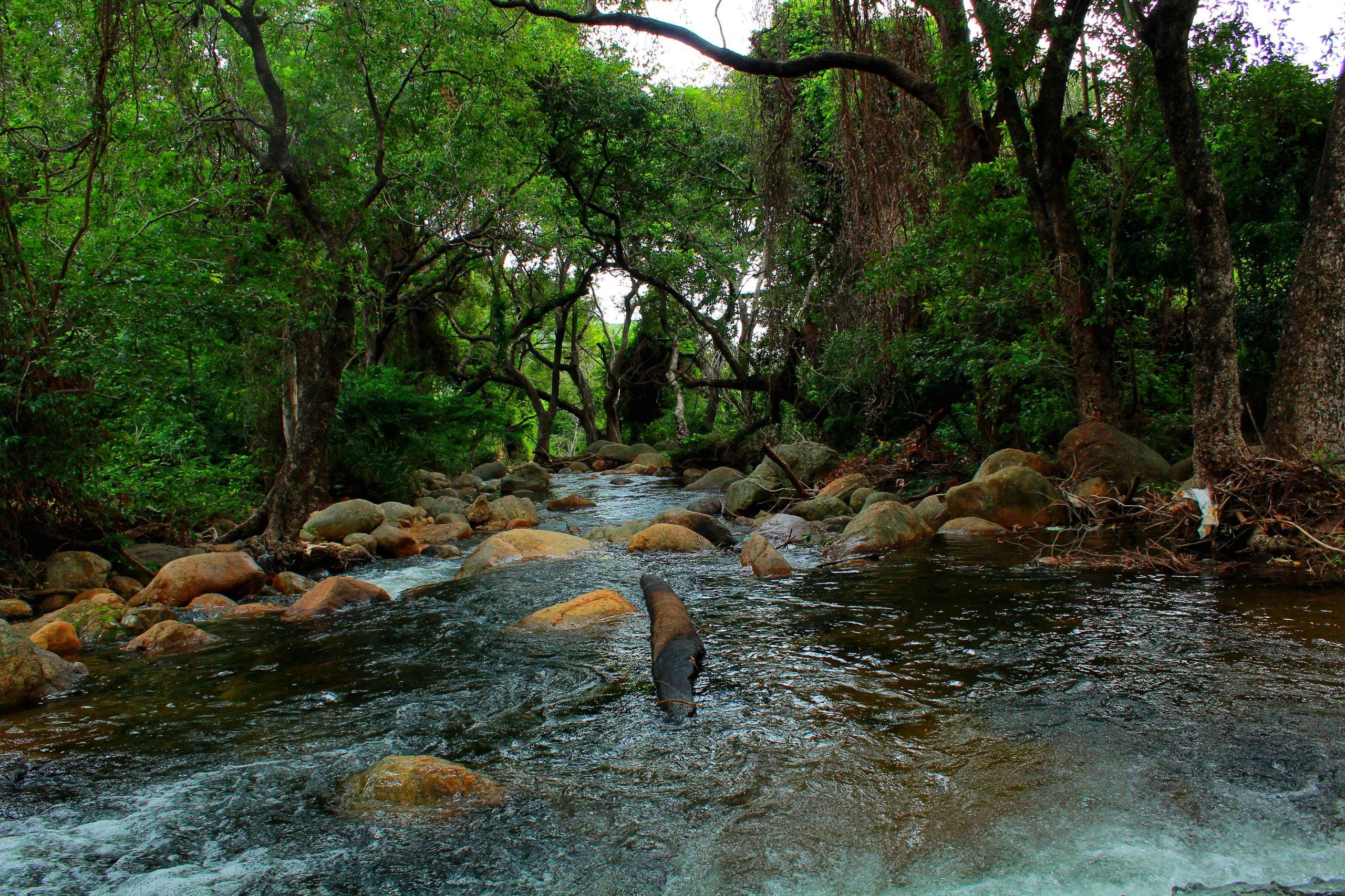 A river flowing through a jungle