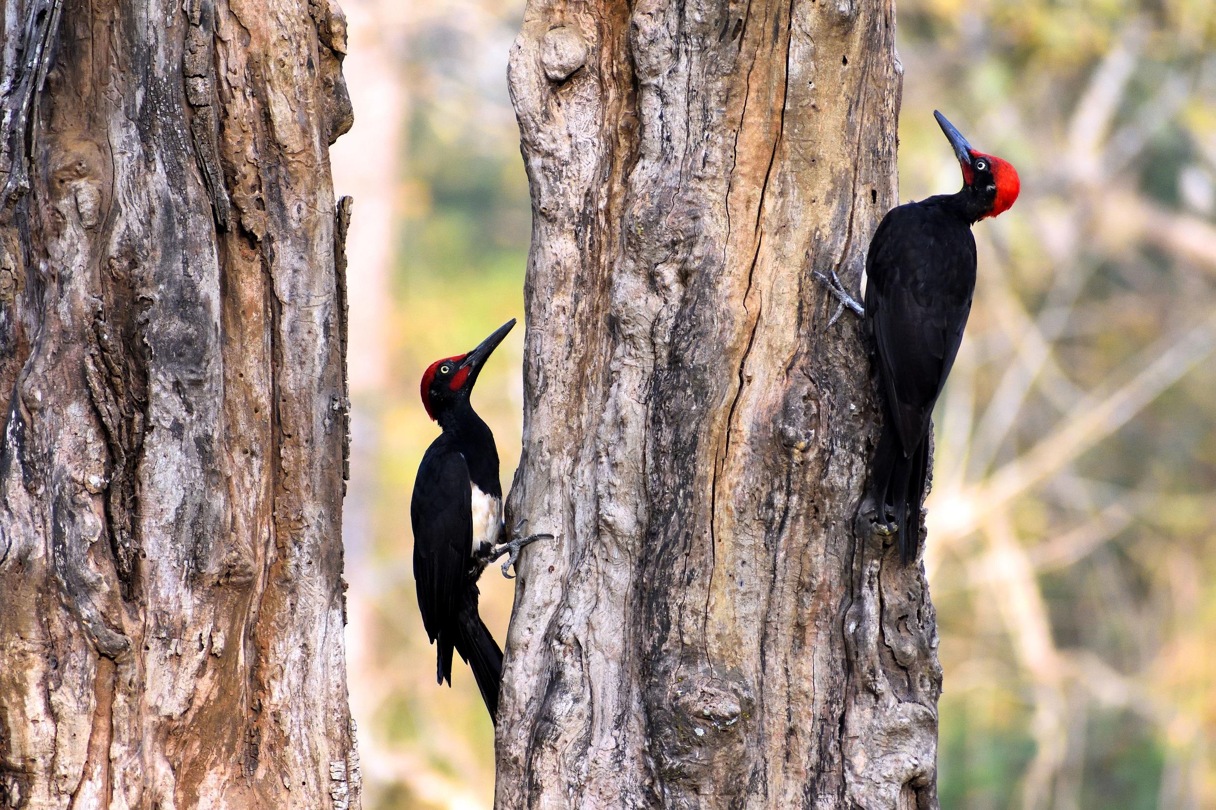 bird on a tree trunk
