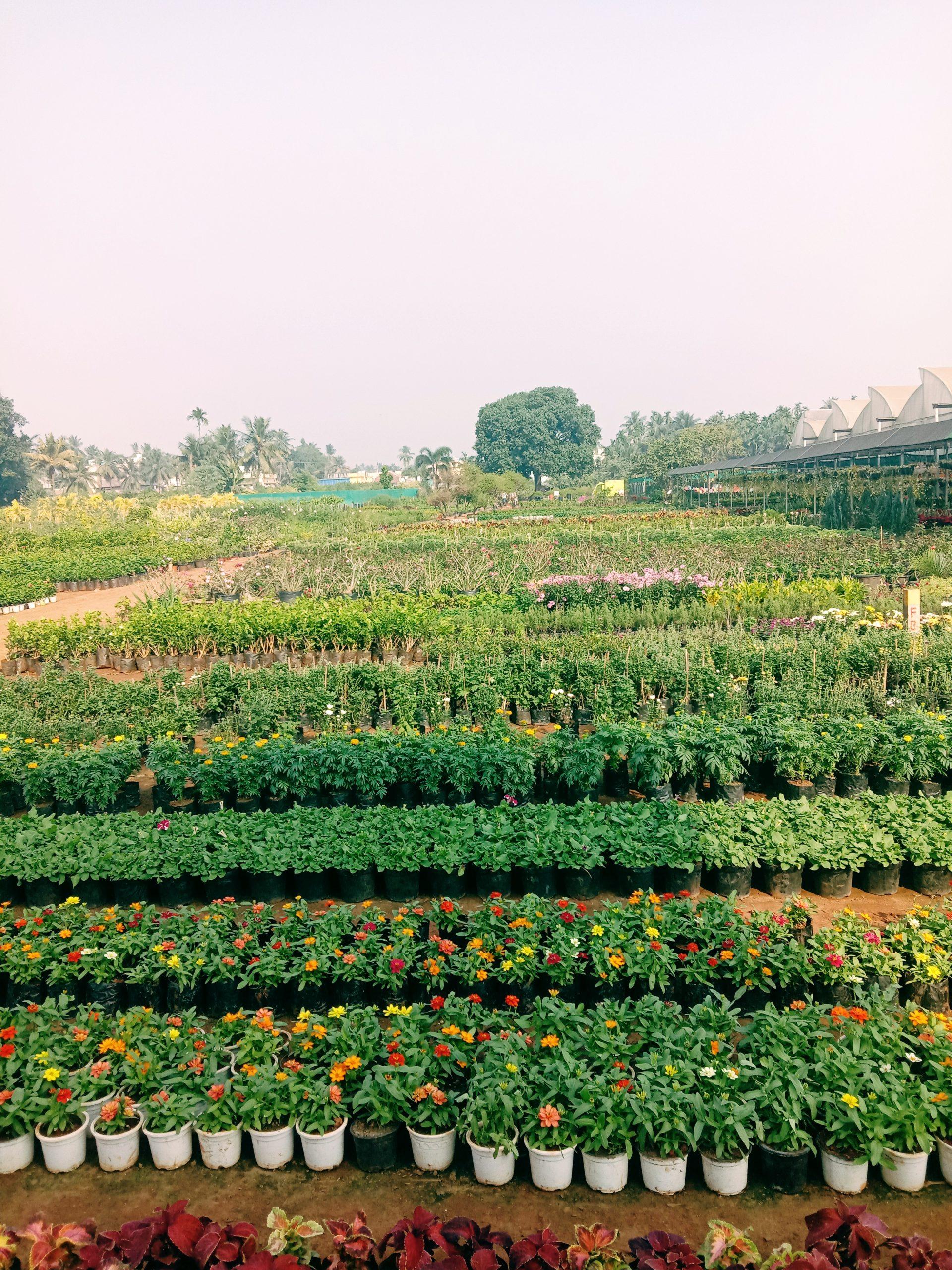 Nursery View