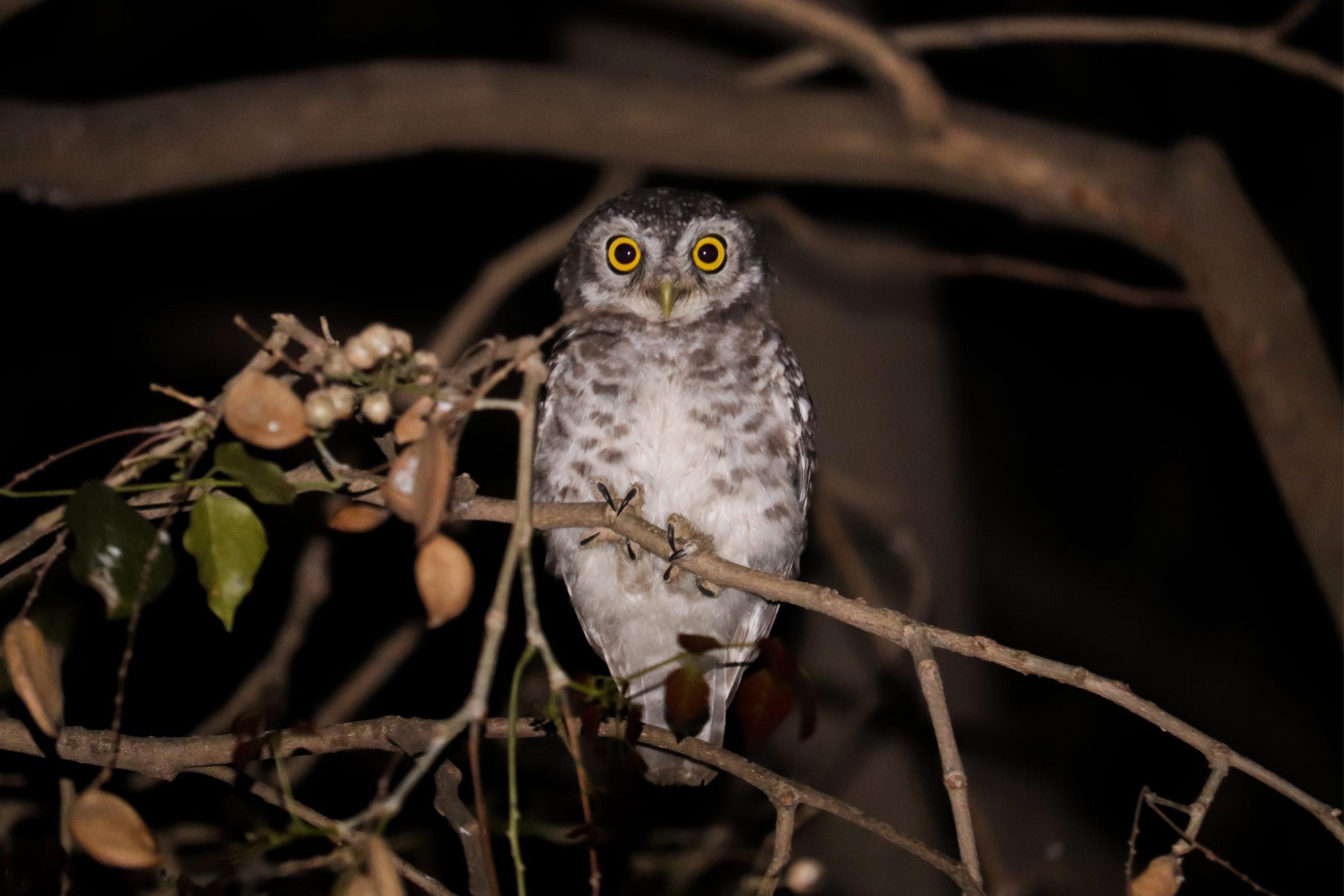 Owl sitting on tree