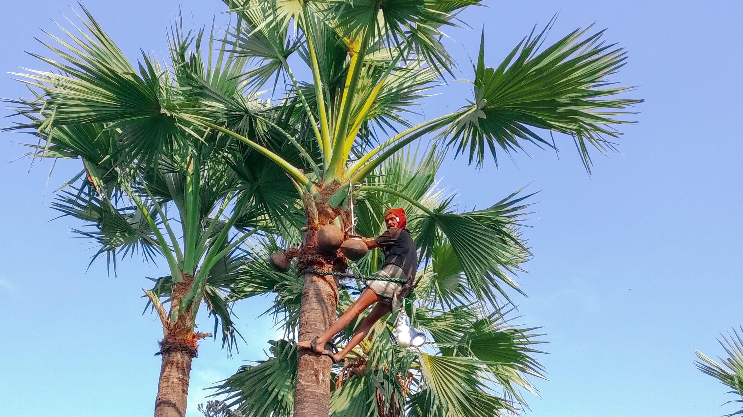A man on coconut tree