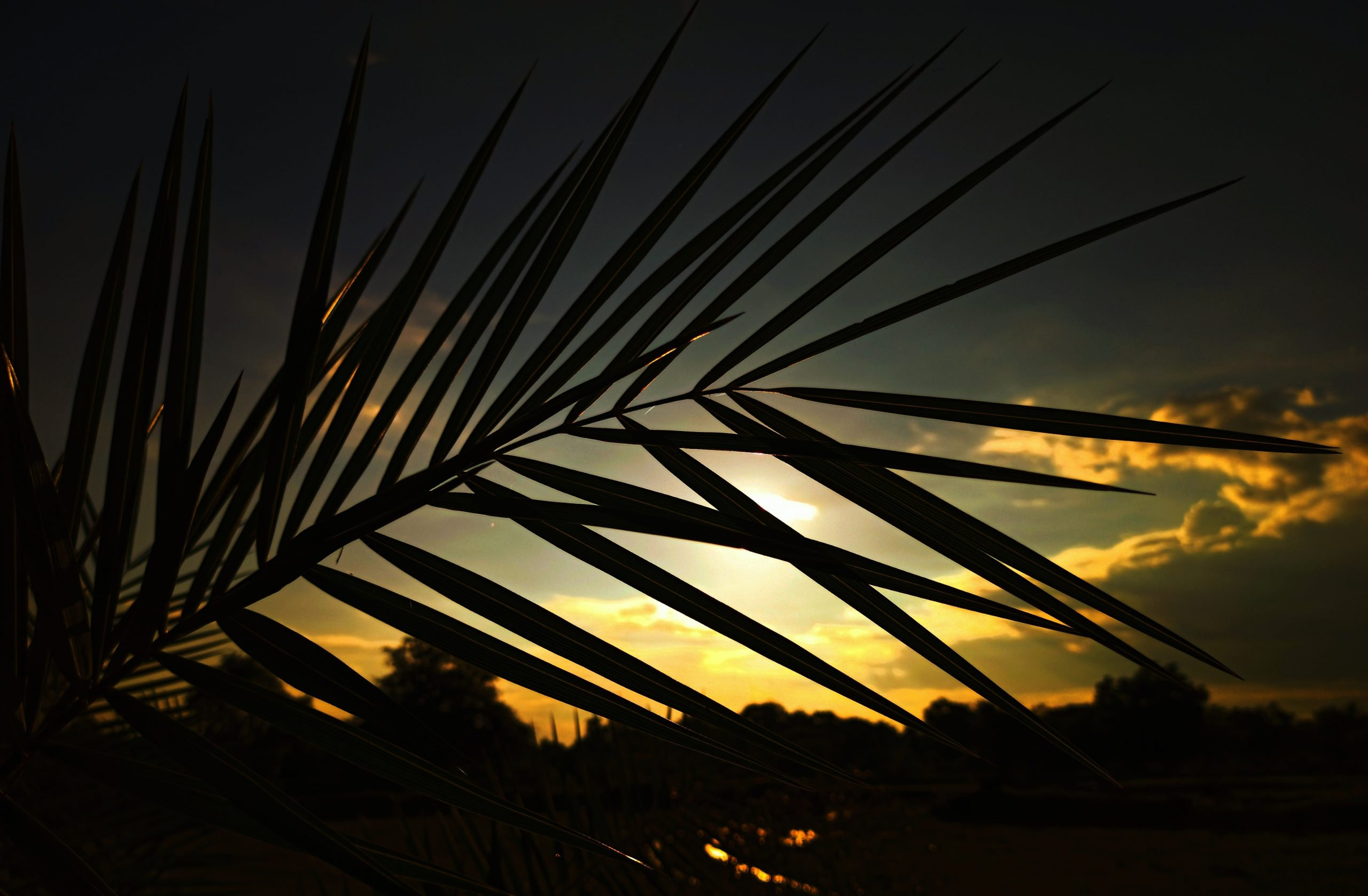 Palm tree leaves and sunset