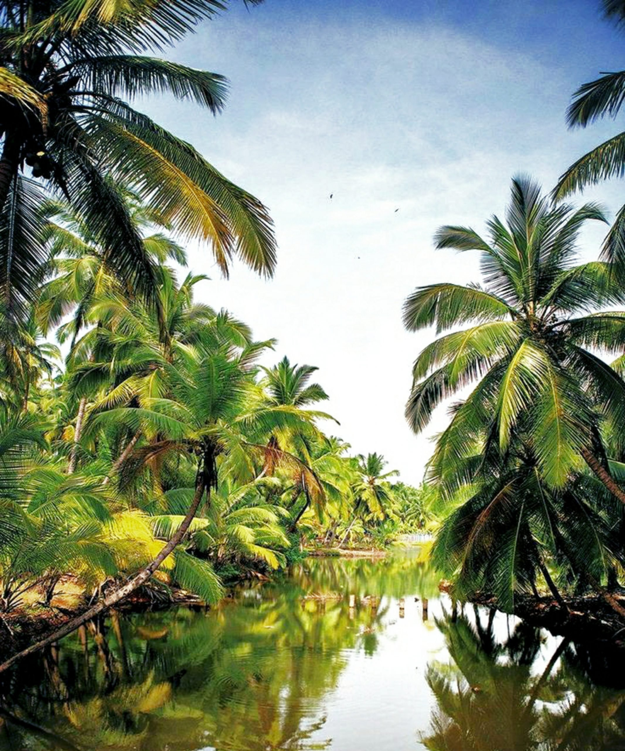 Palm trees and water in Kerala