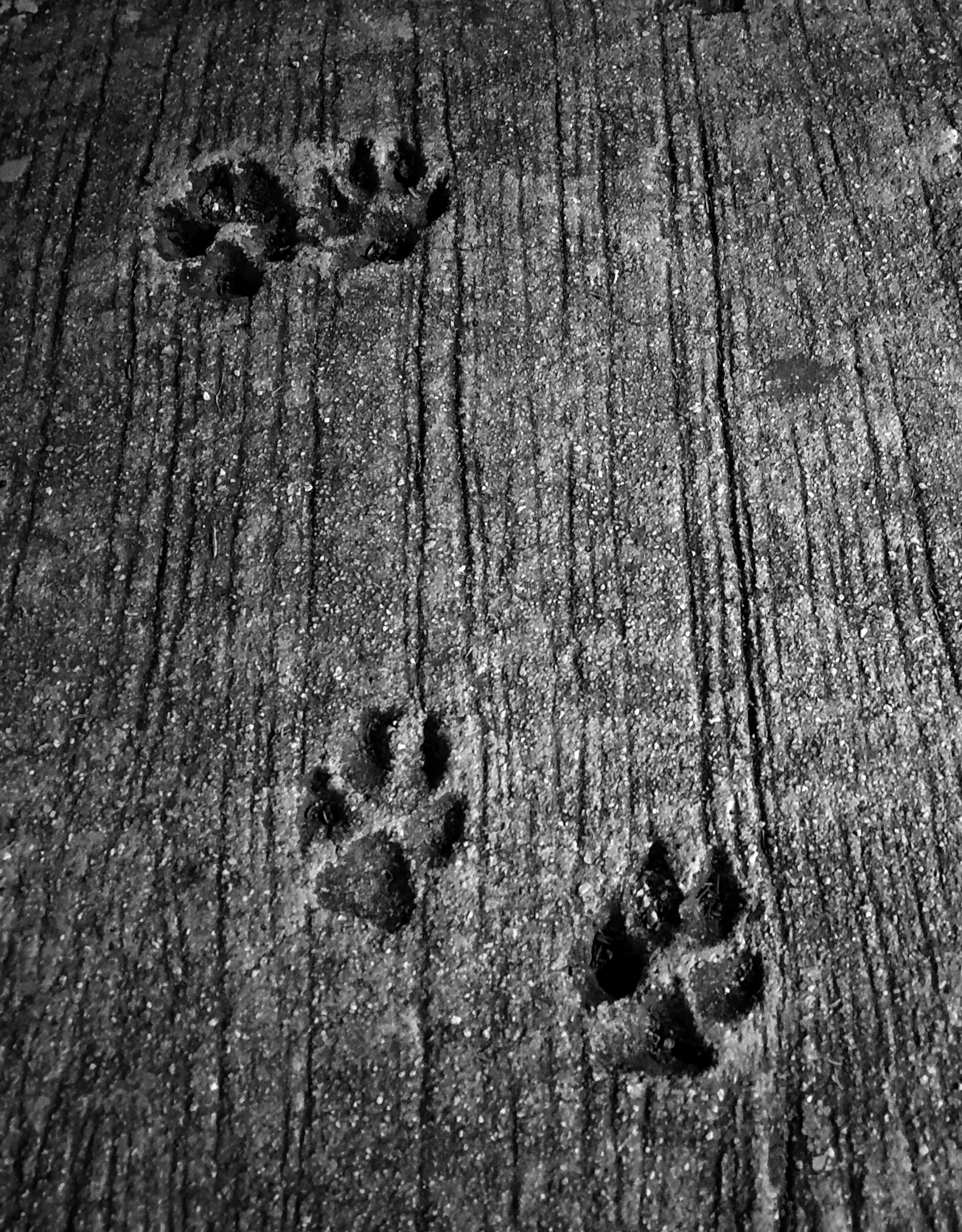 Dog pawmarks