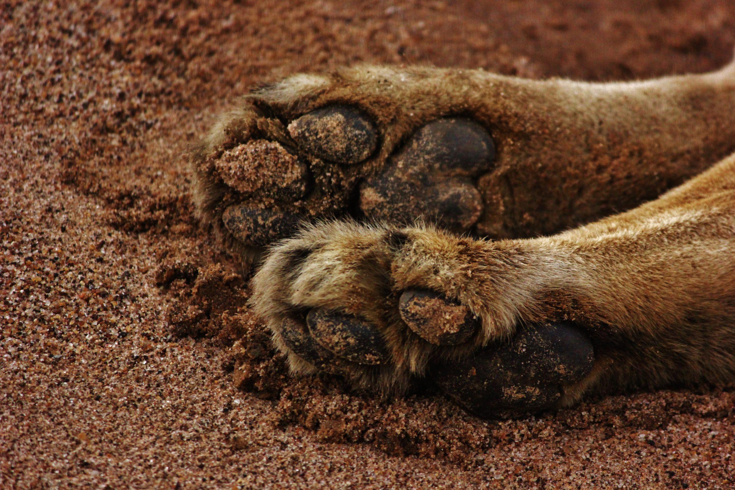 Paws of an animal