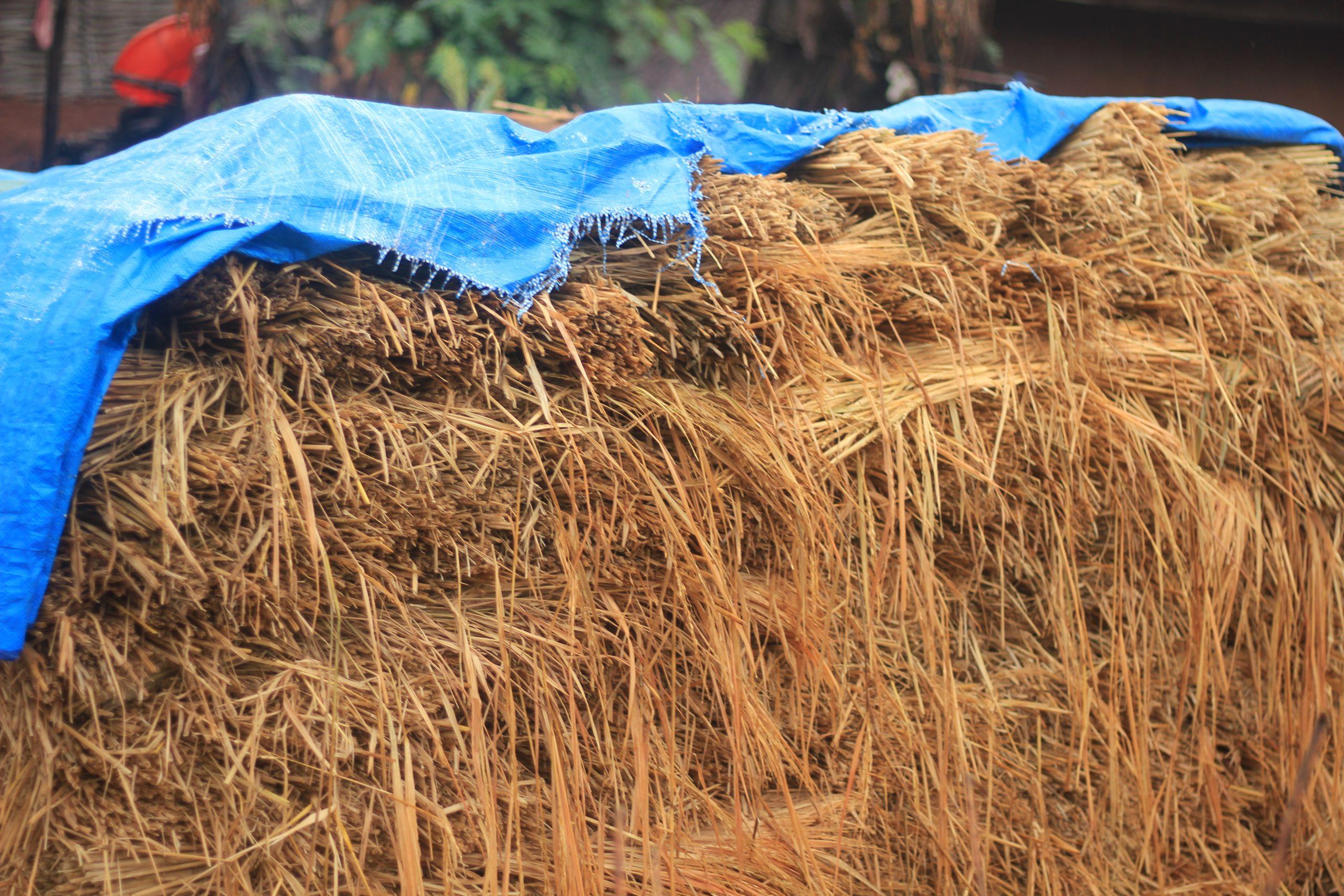 Rice straws