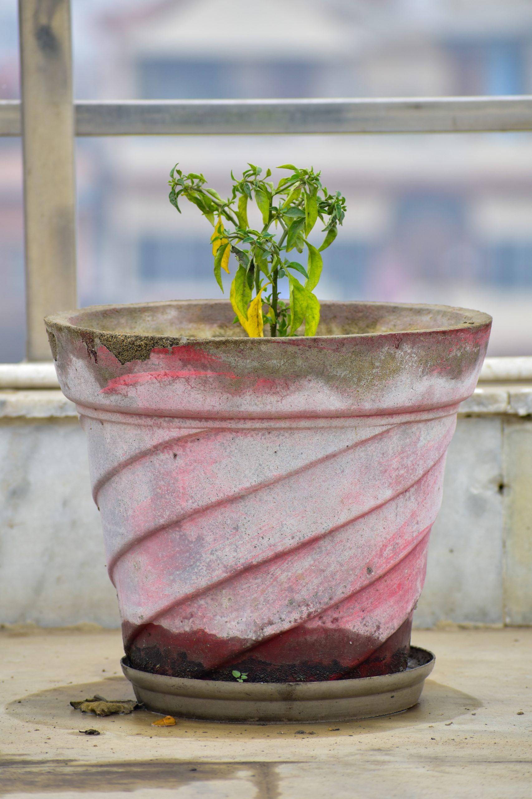 Plant in concrete pot