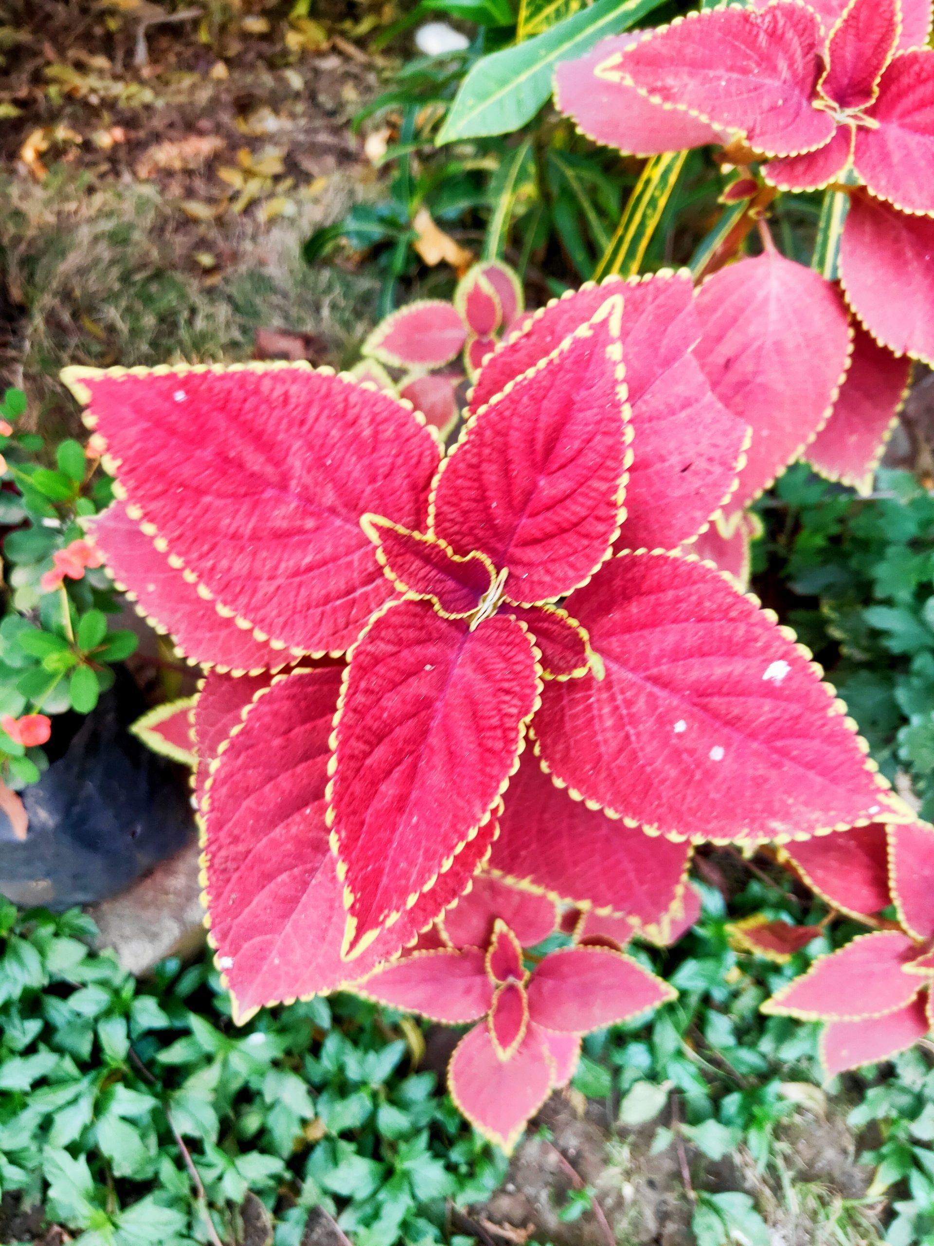 Plant macro view