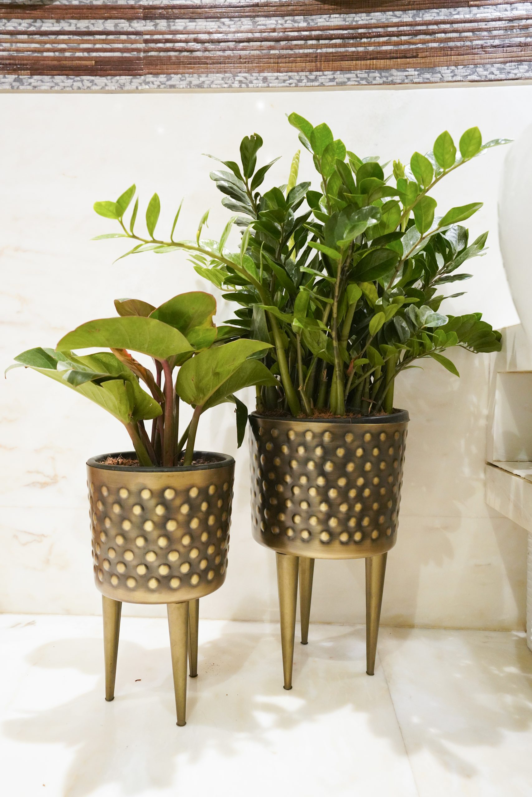 Plant pots on the stool