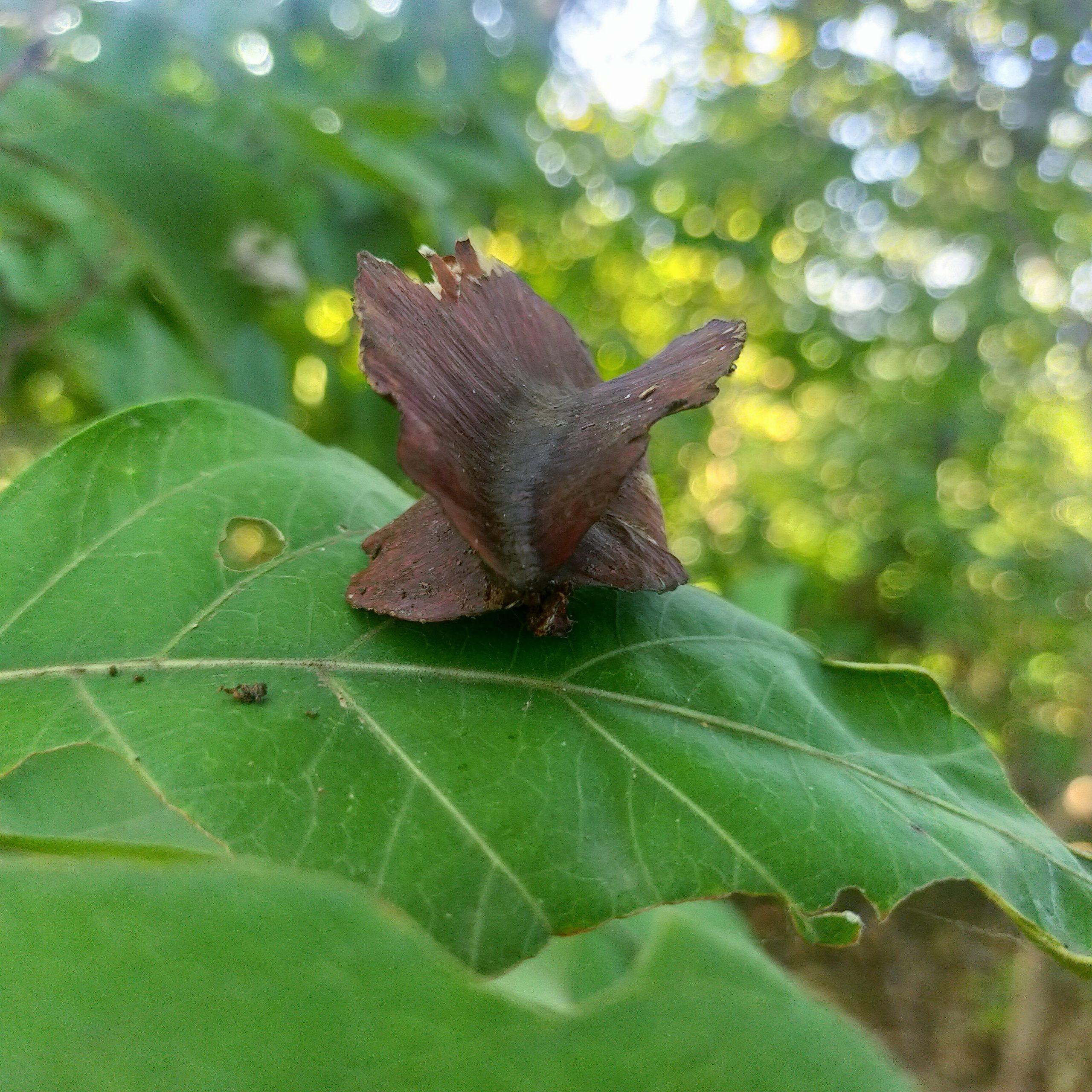 Seed on leaf