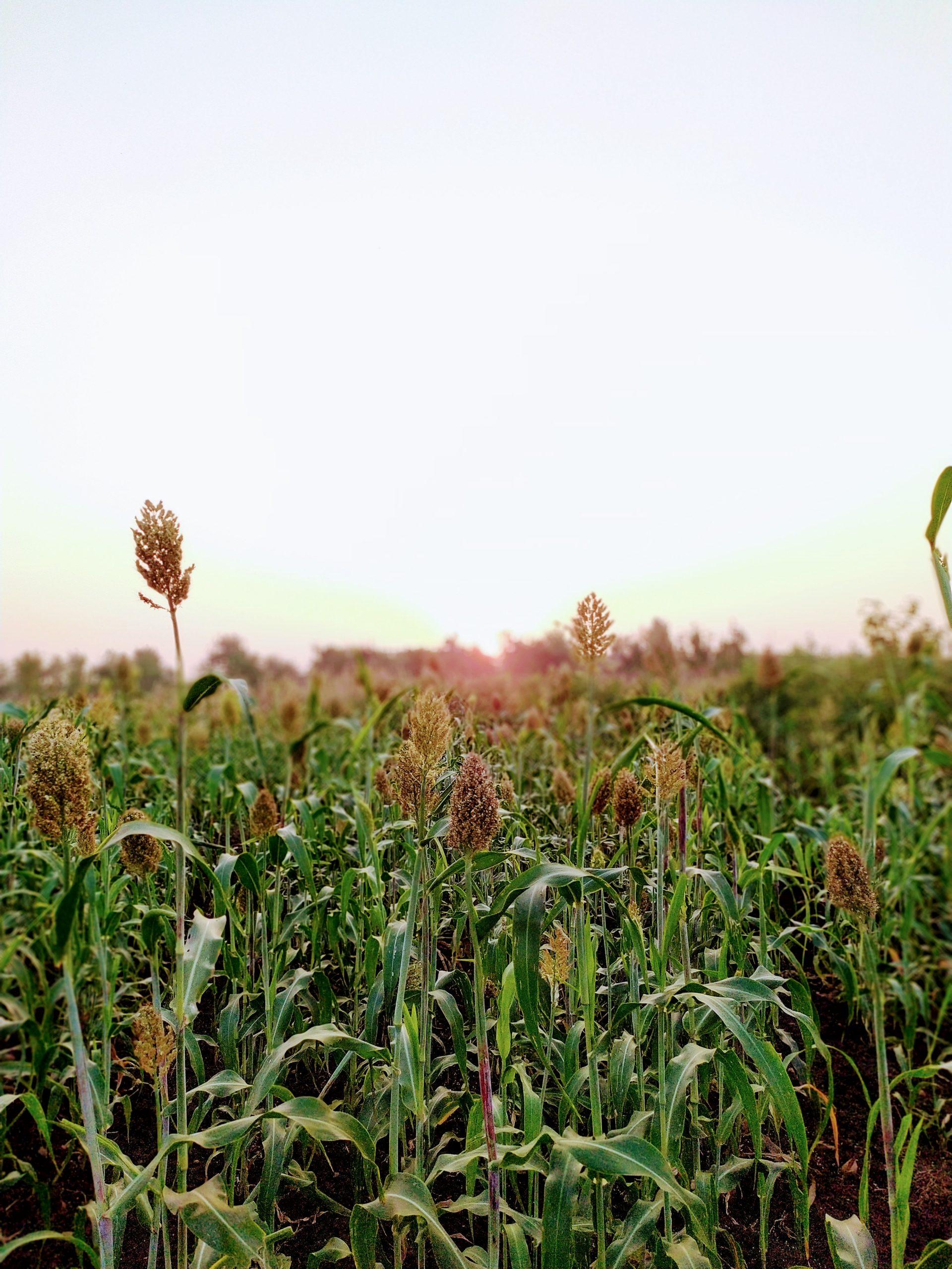 Plants in a field