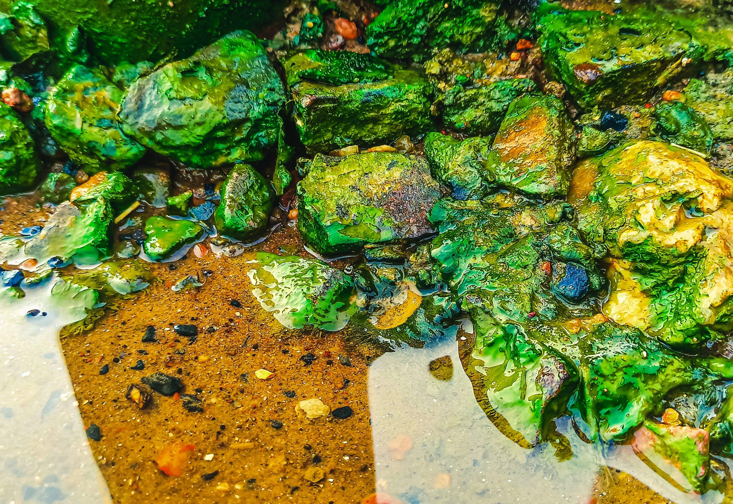Wet rock stones near a pond