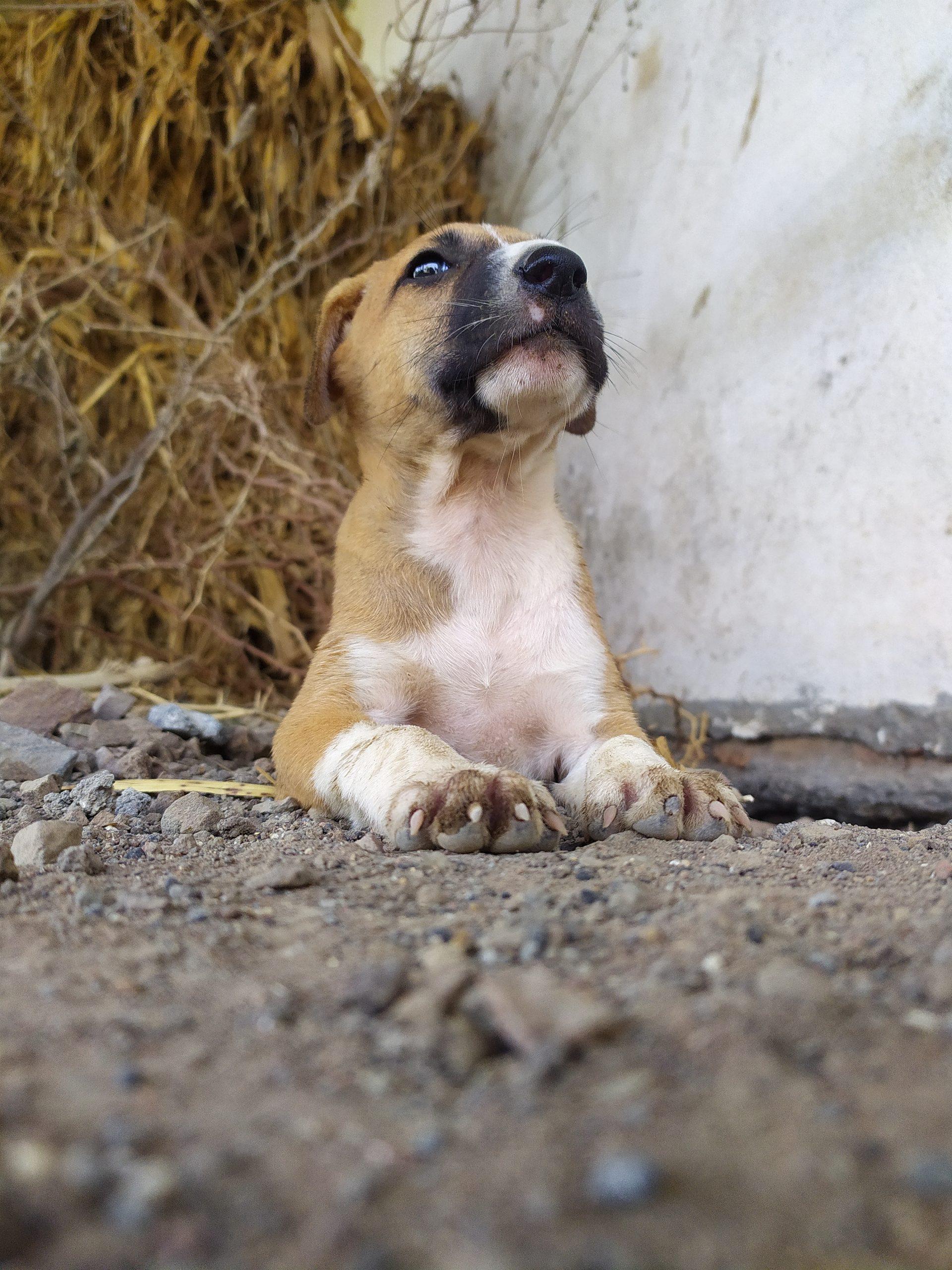 Puppy on ground