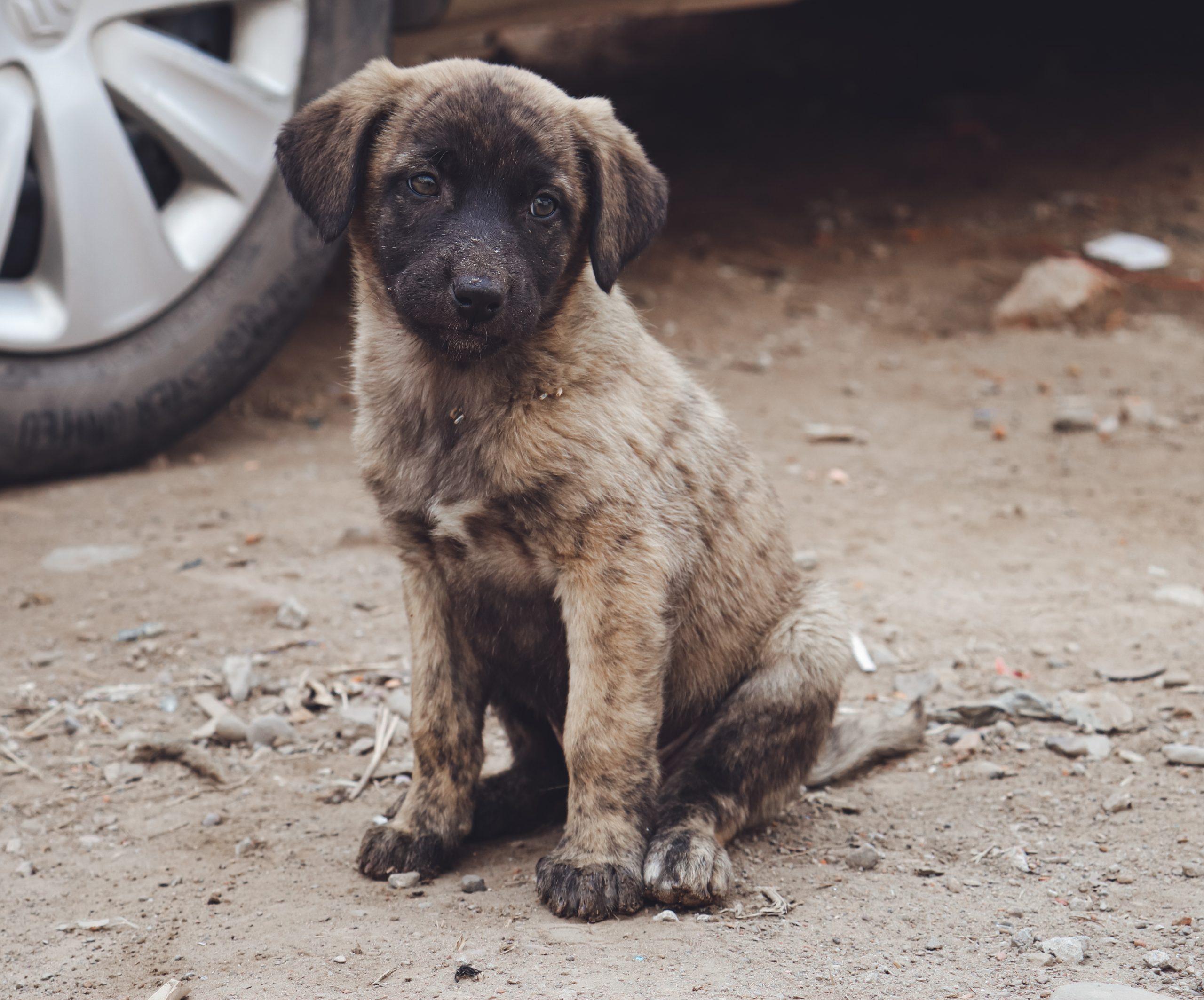 Puppy sitting on road