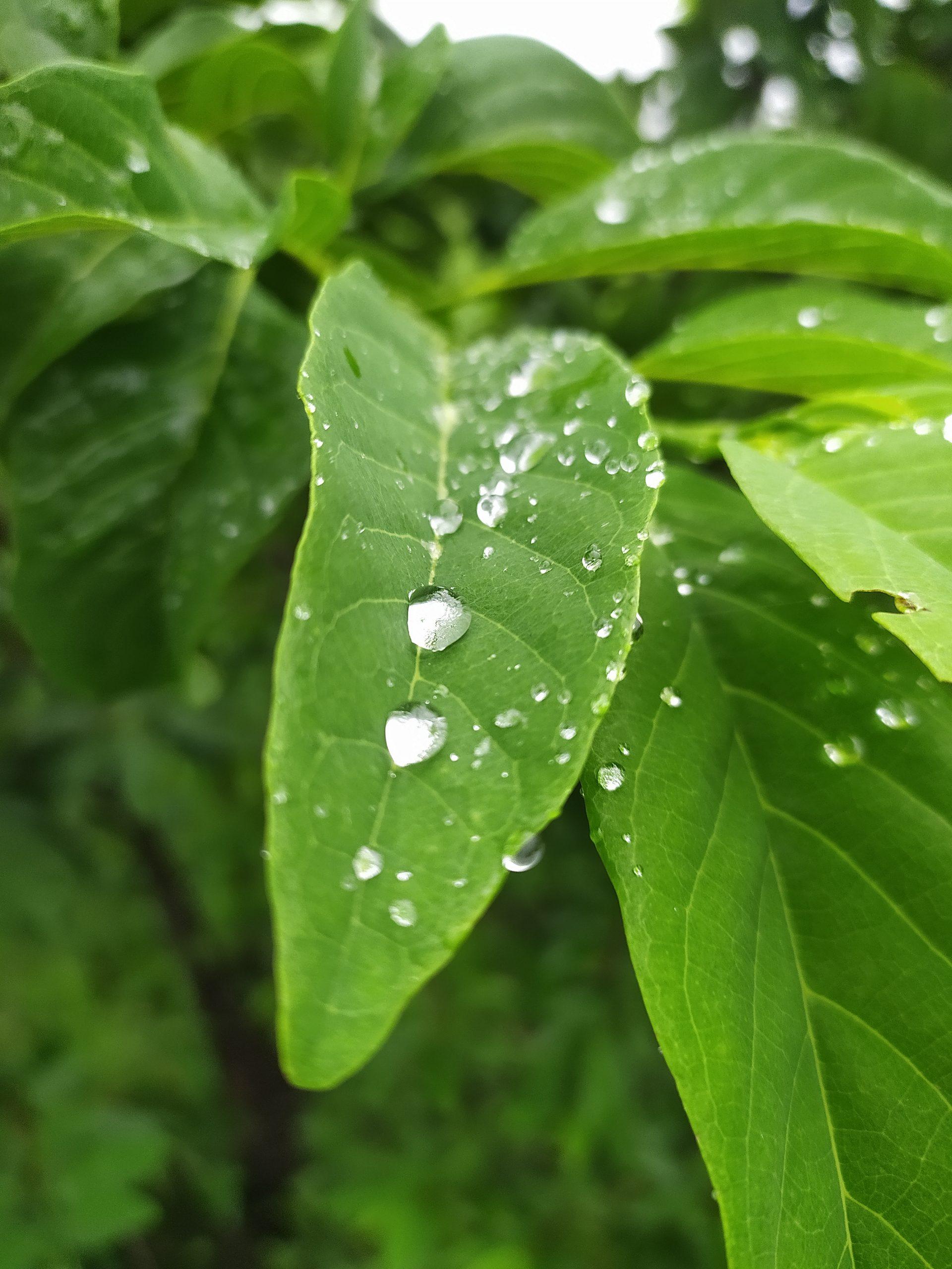 Rain drops on a plant leaves