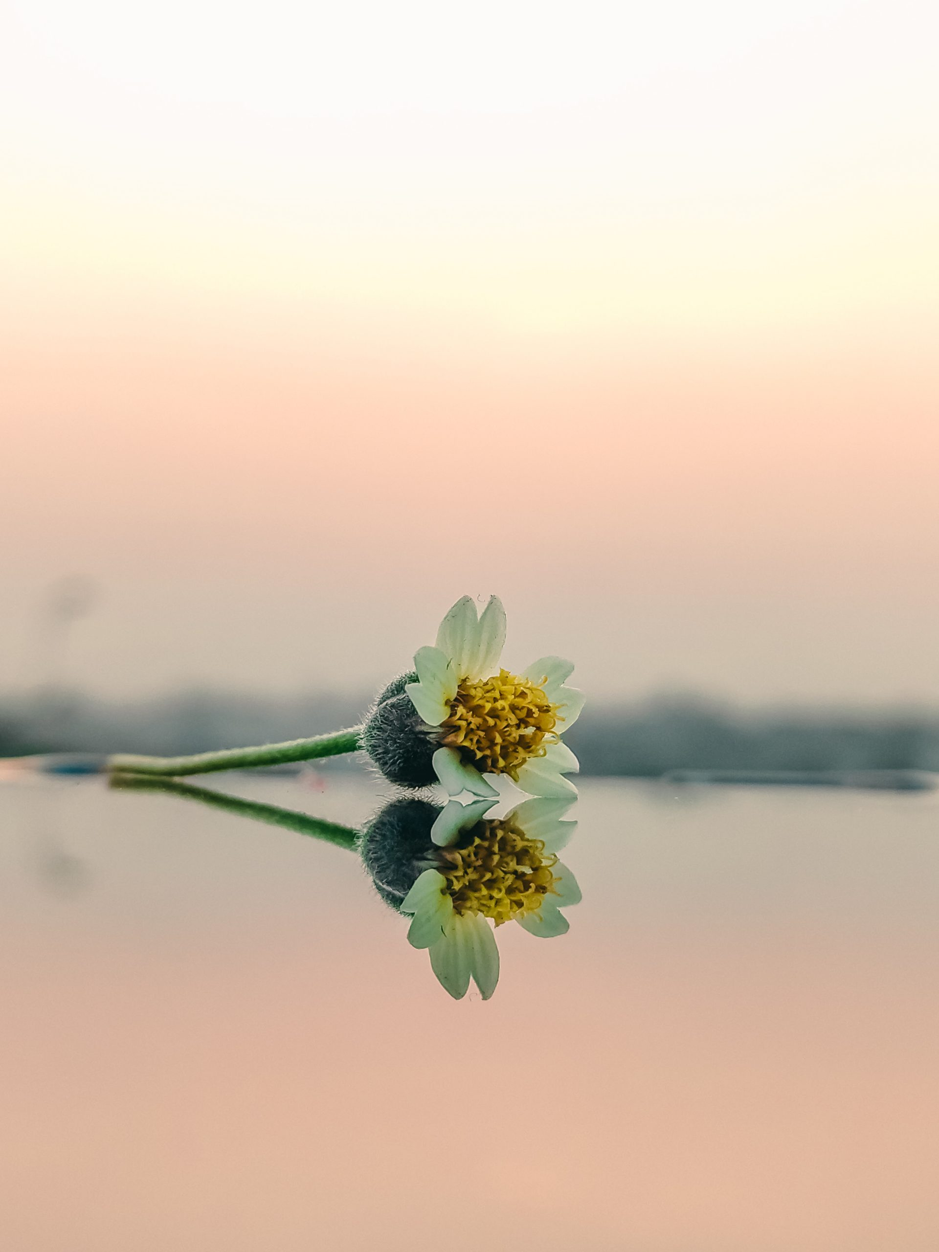Reflection of a cut flower