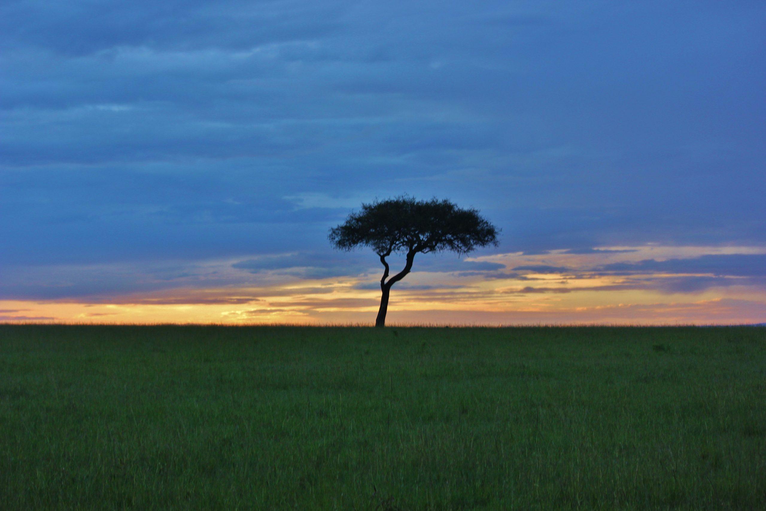 Savana grassland