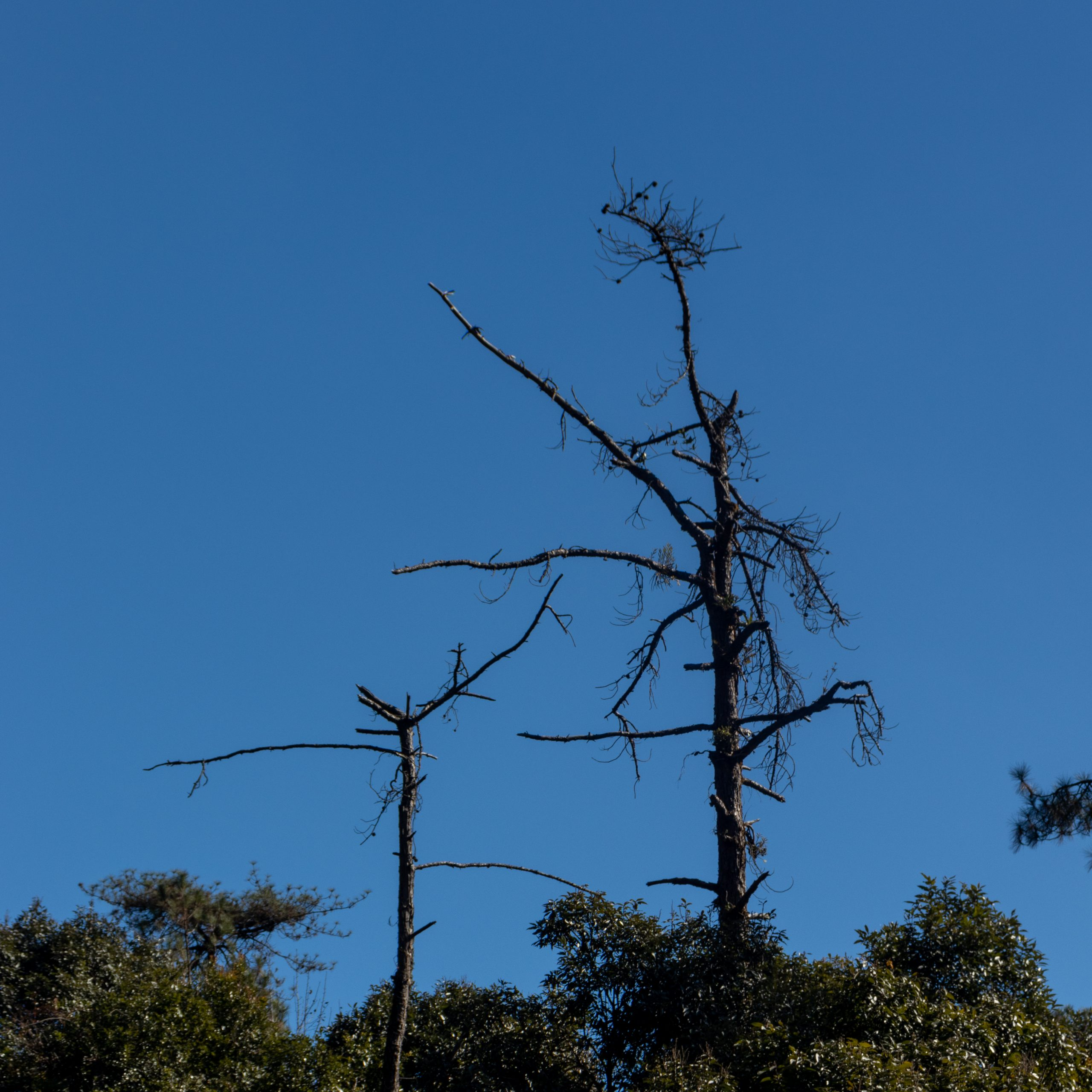 Dry and dead trees