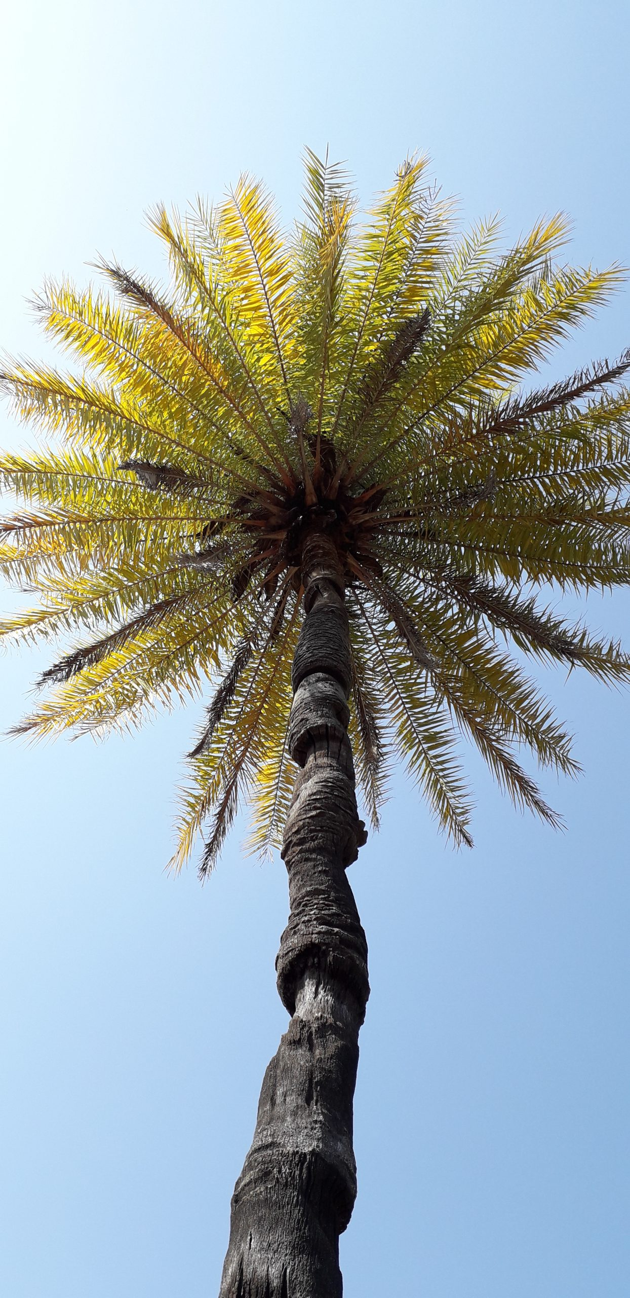 Palm tree under sunlight and sky
