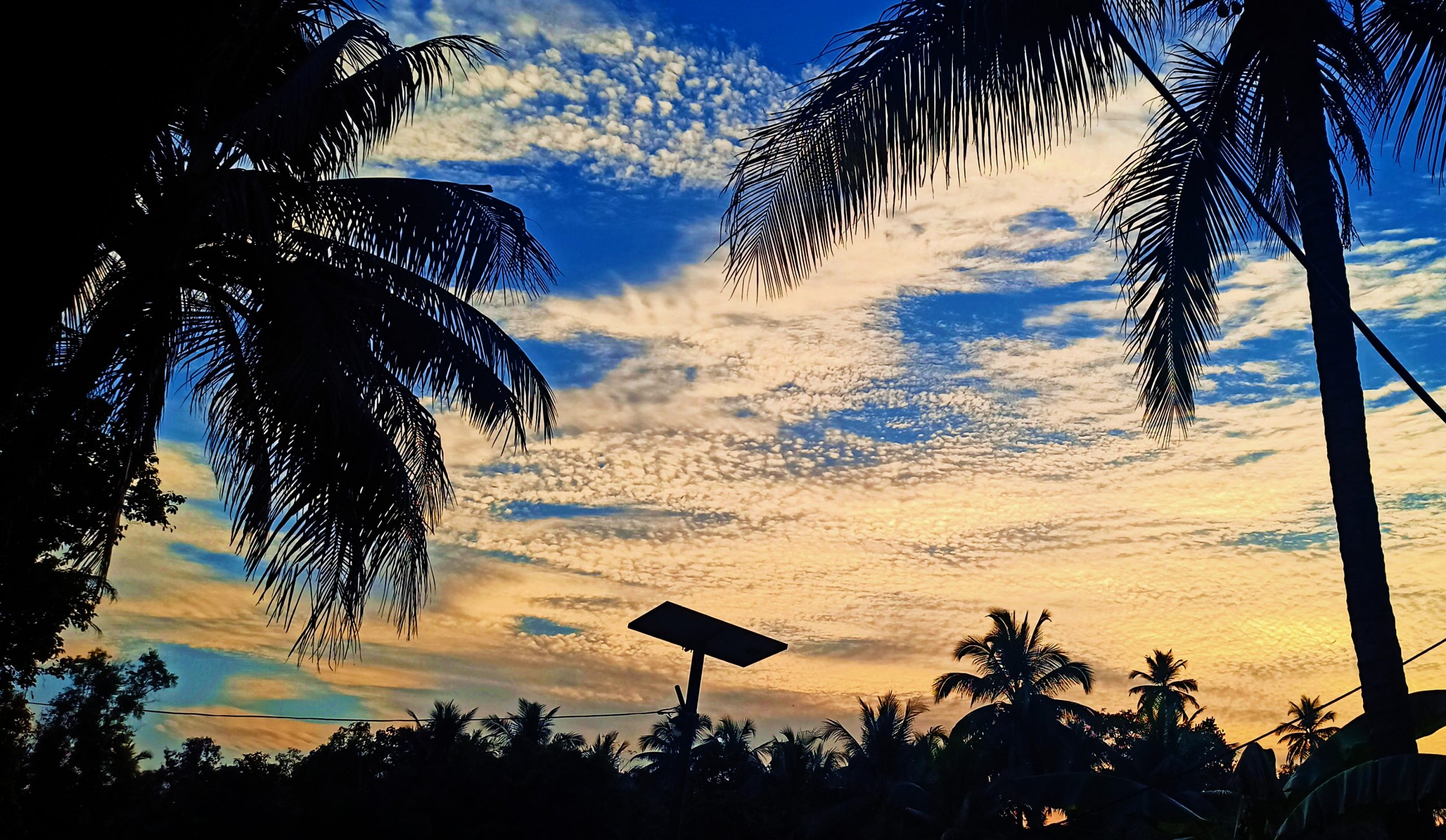 Sky landscape with palm trees