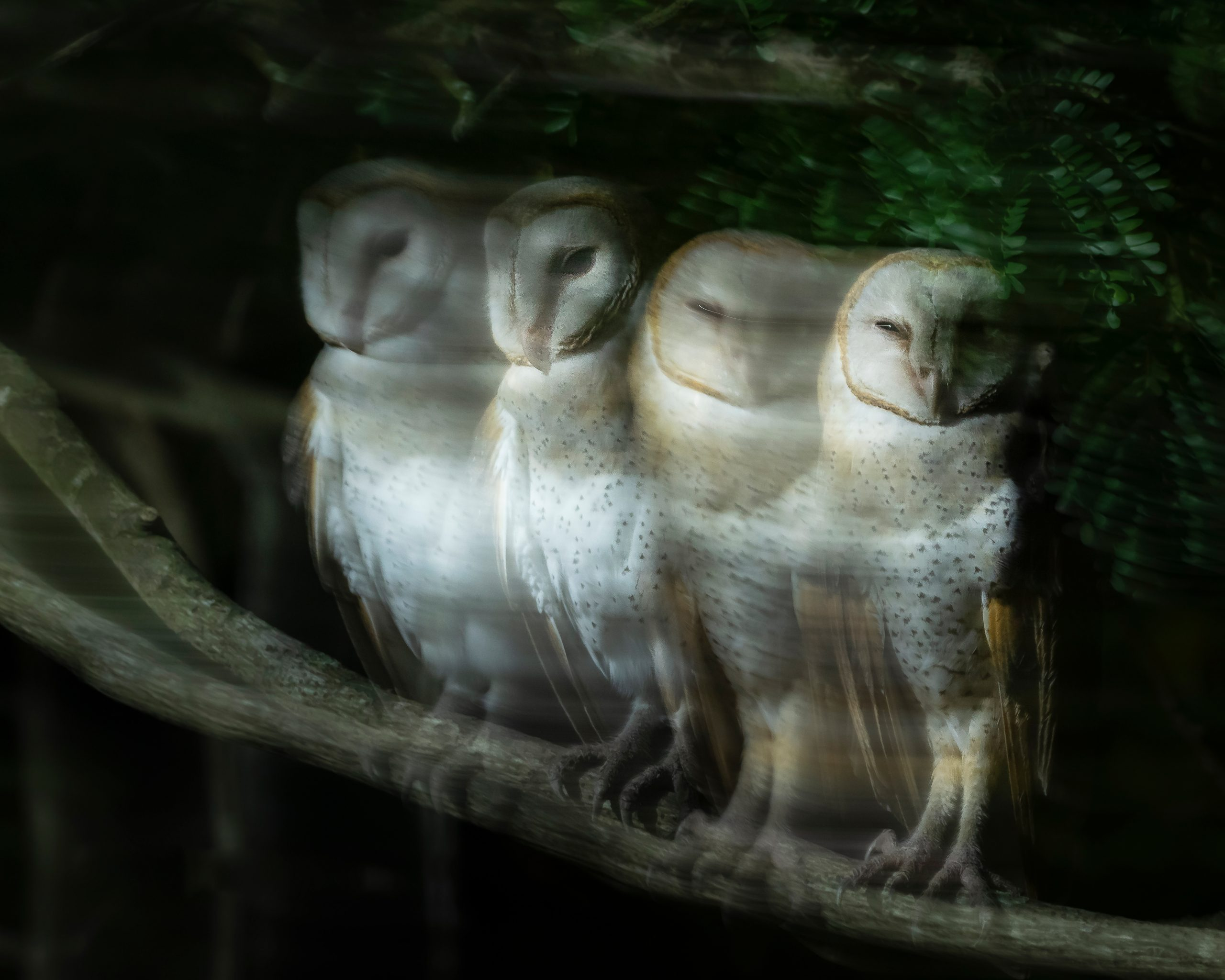 Slow shutter Click of Owl