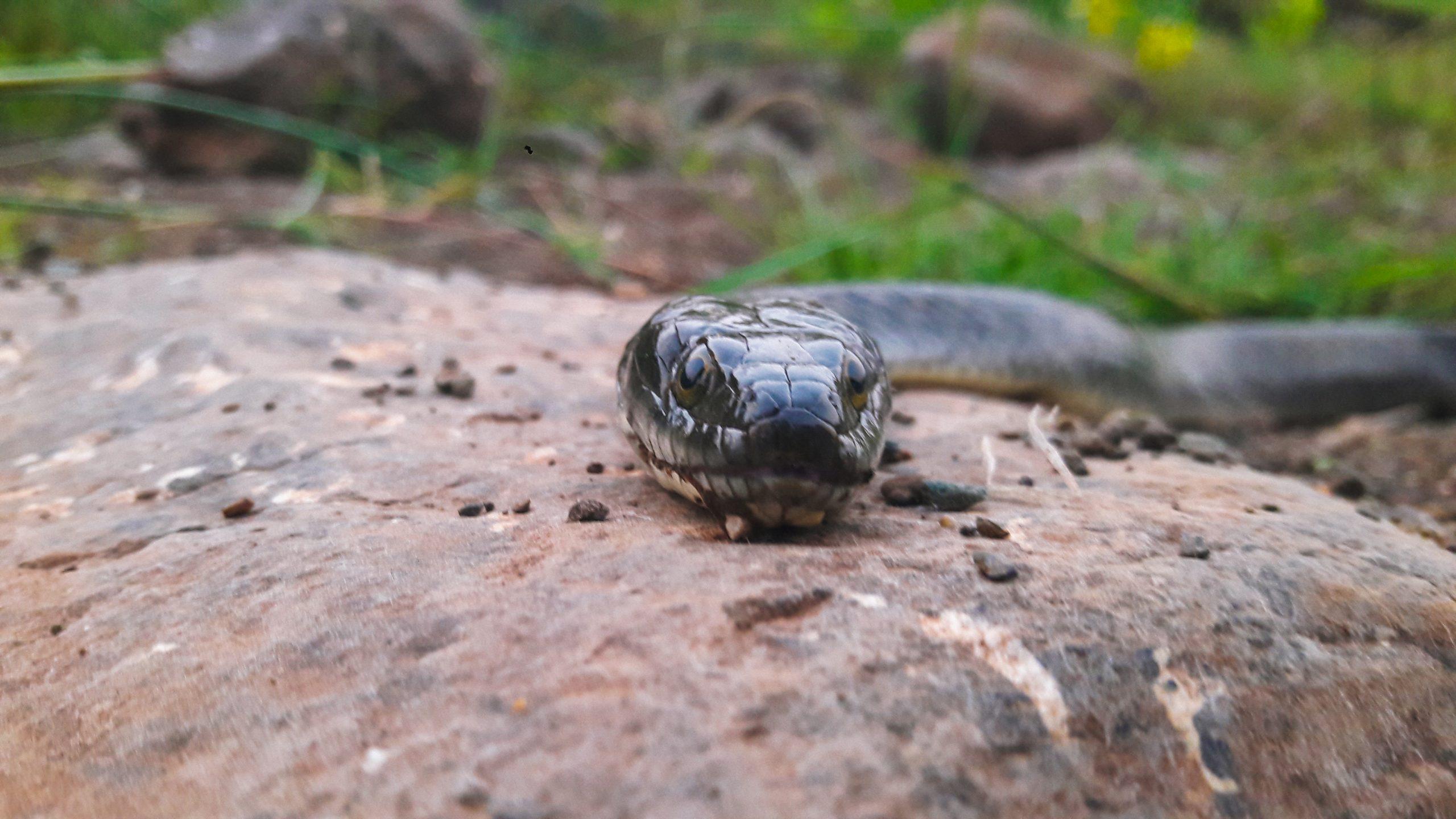 Snake on rock