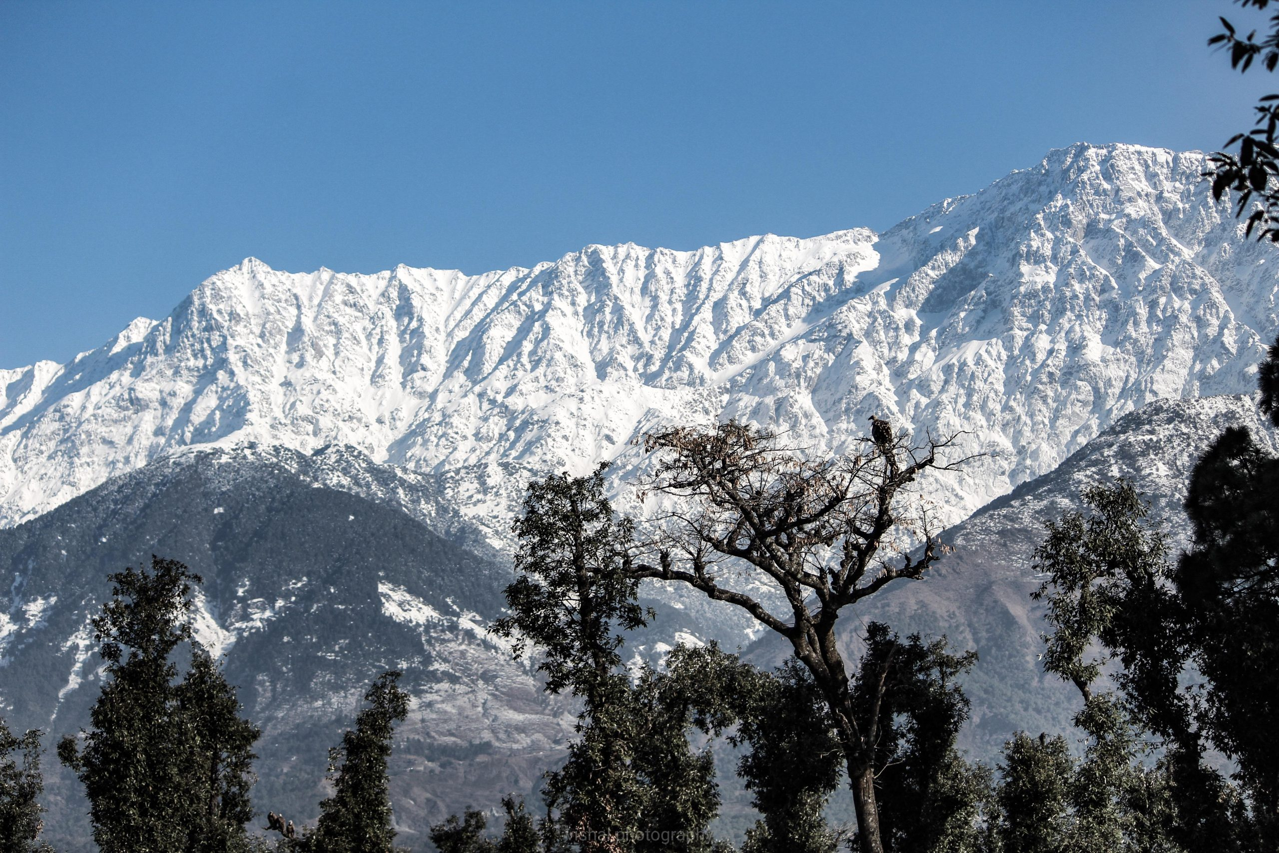 Snowy Dhauladhar mountain range Dharamshala