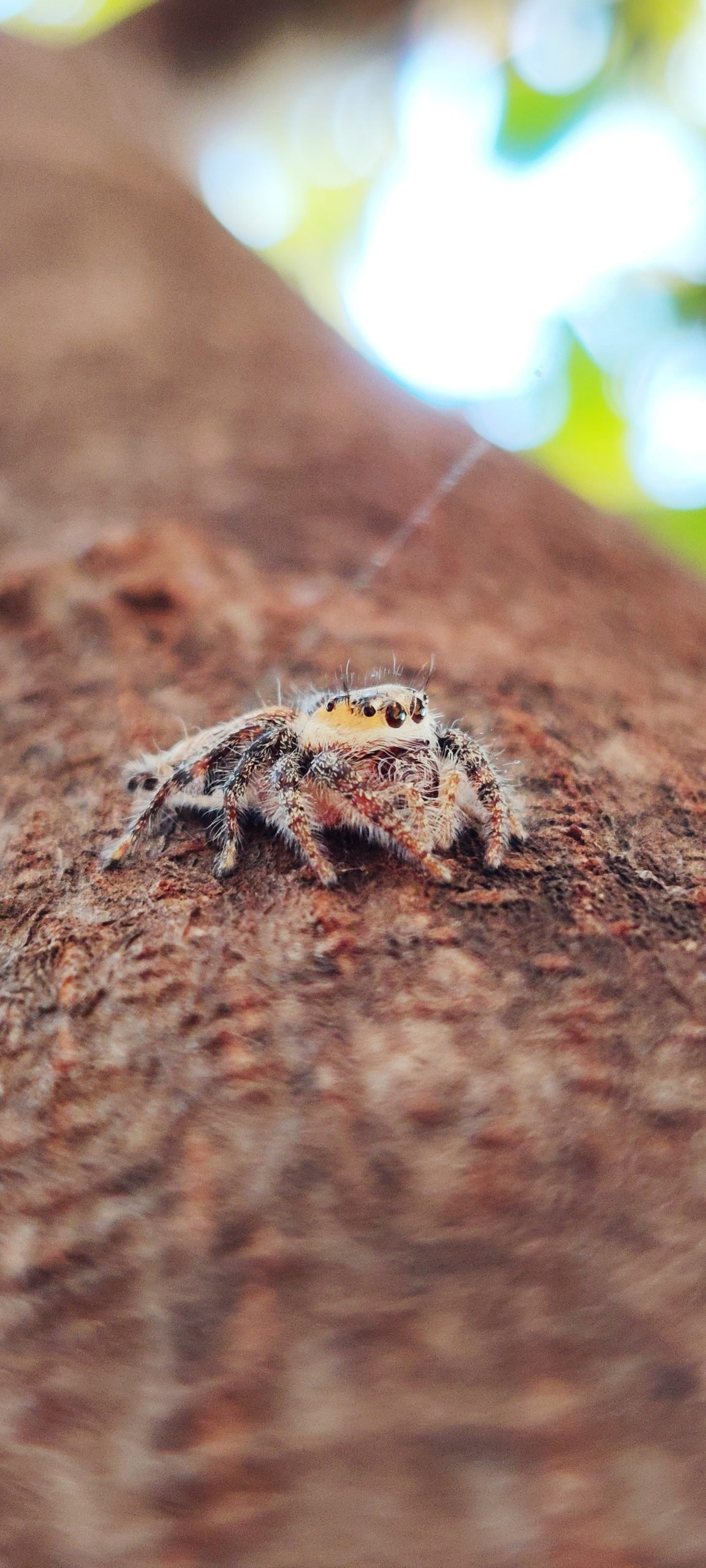 Spider on wood
