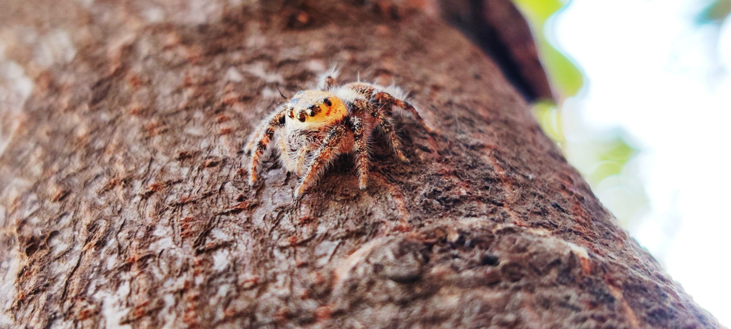 Spider on branch of tree