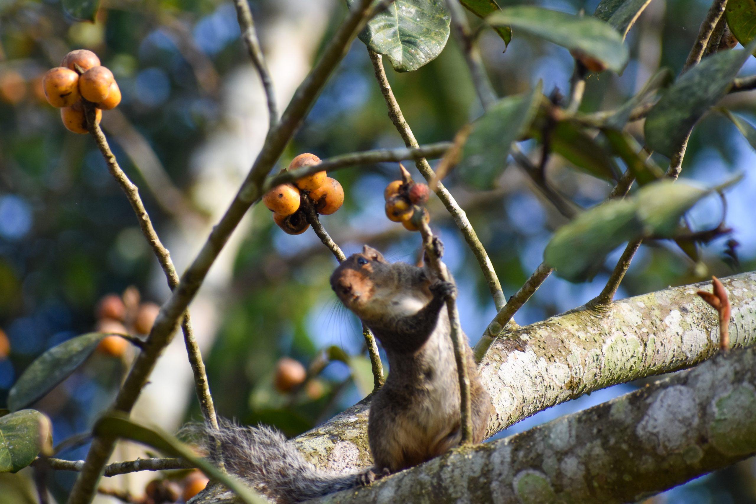 Squirrel holding stem