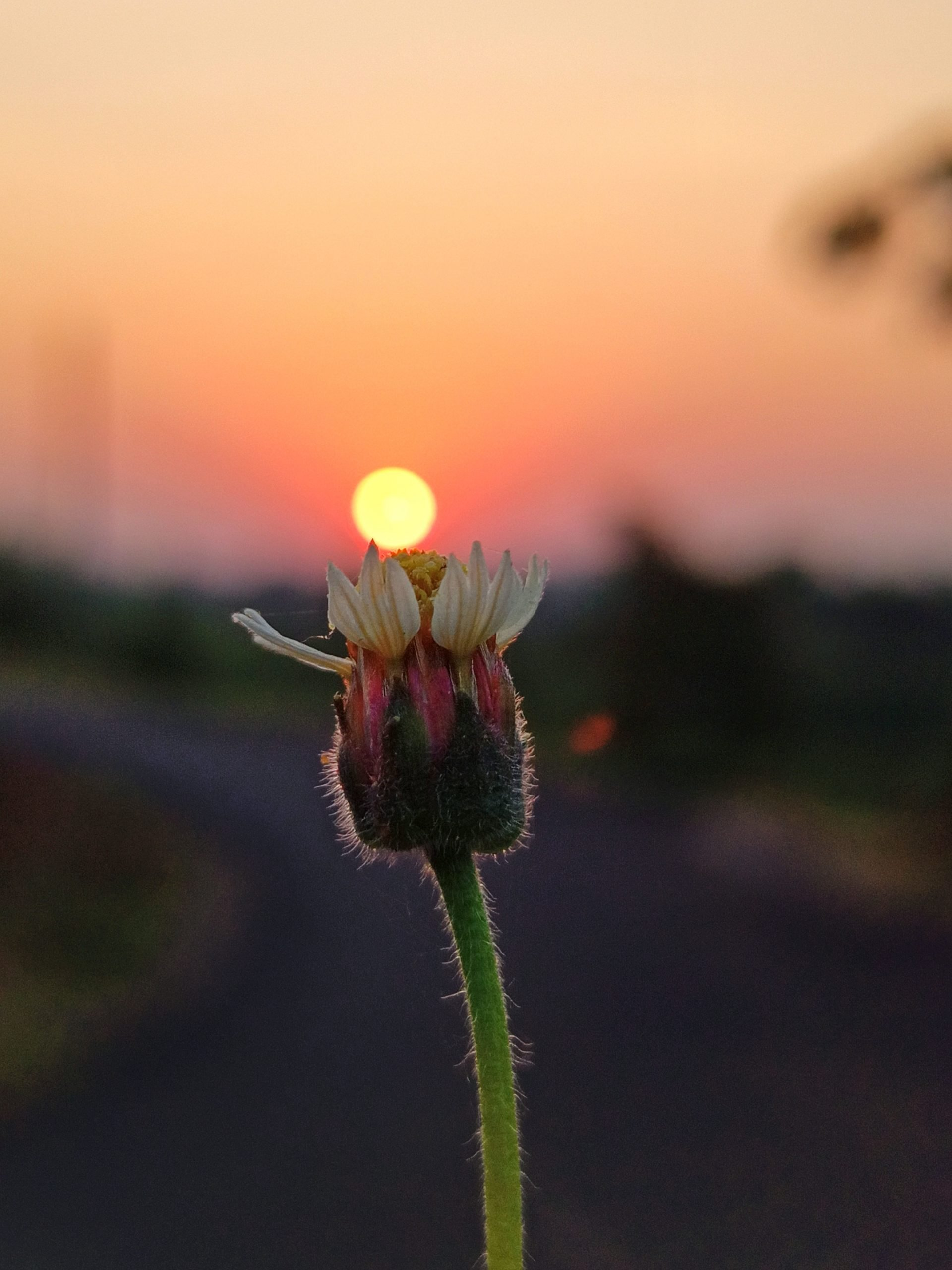 Rising Sun and Flower