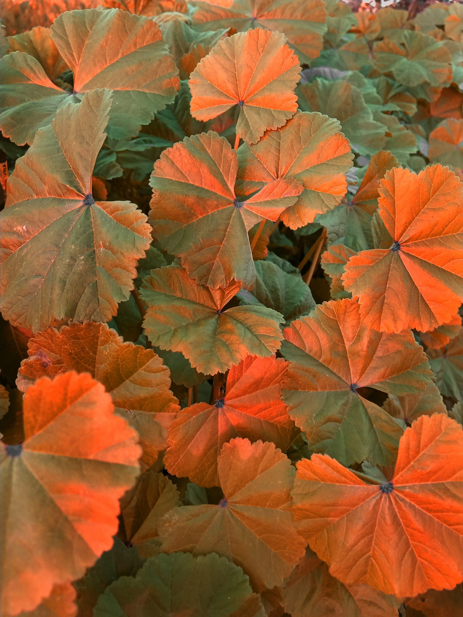 Sunlight on plant leaves