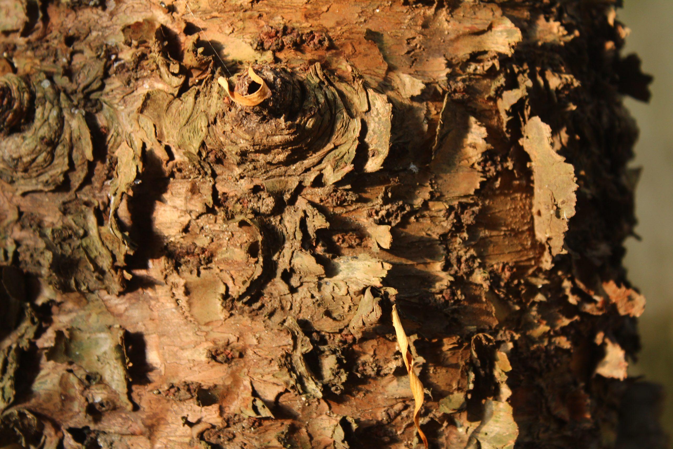 Textured tree bark