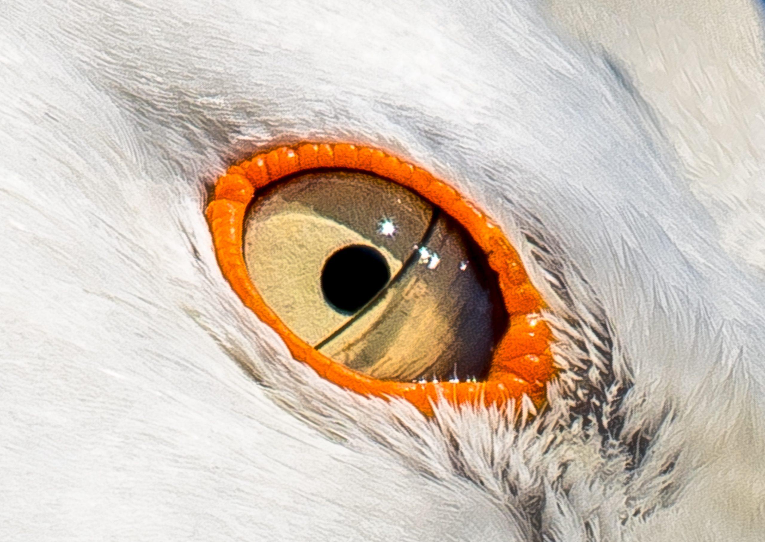 Bird eye macro view