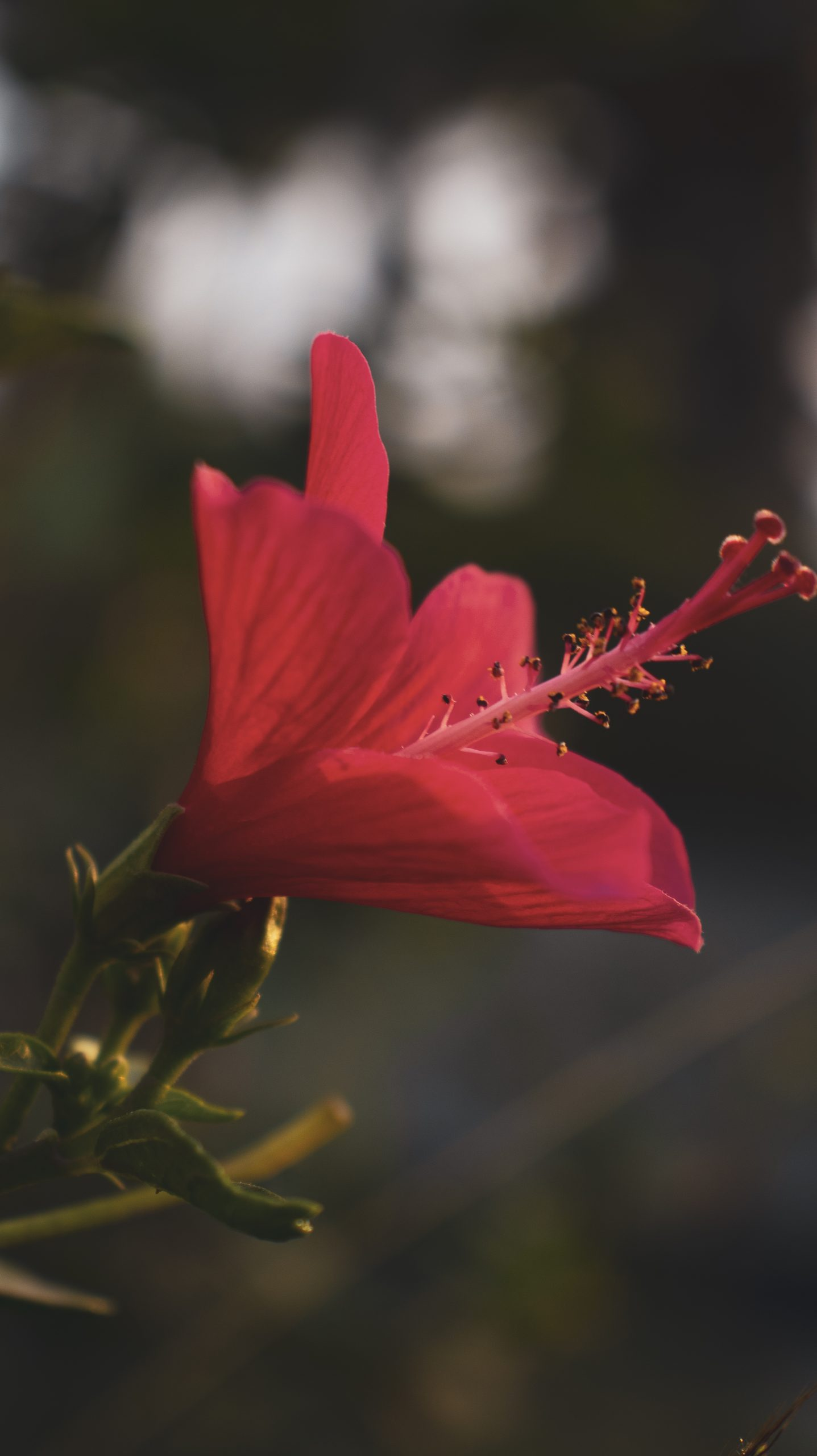 The Sunkissed Flower