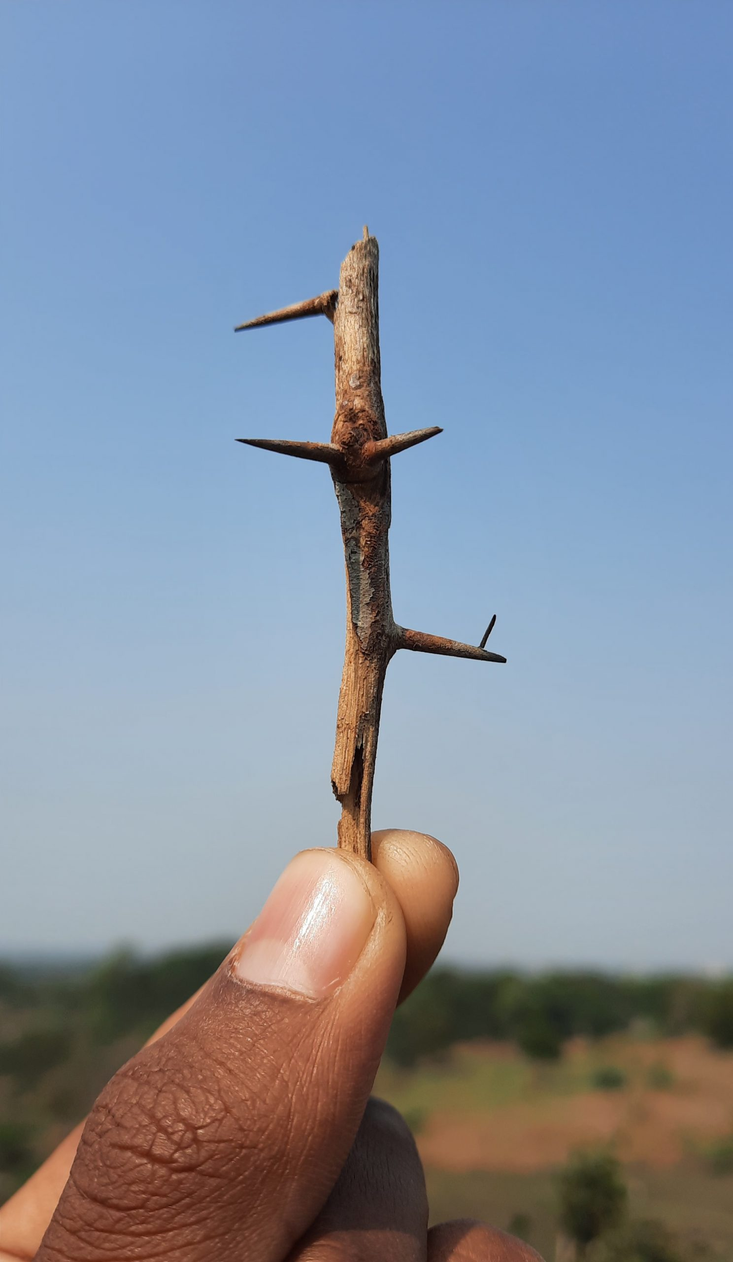 Thorn in hand