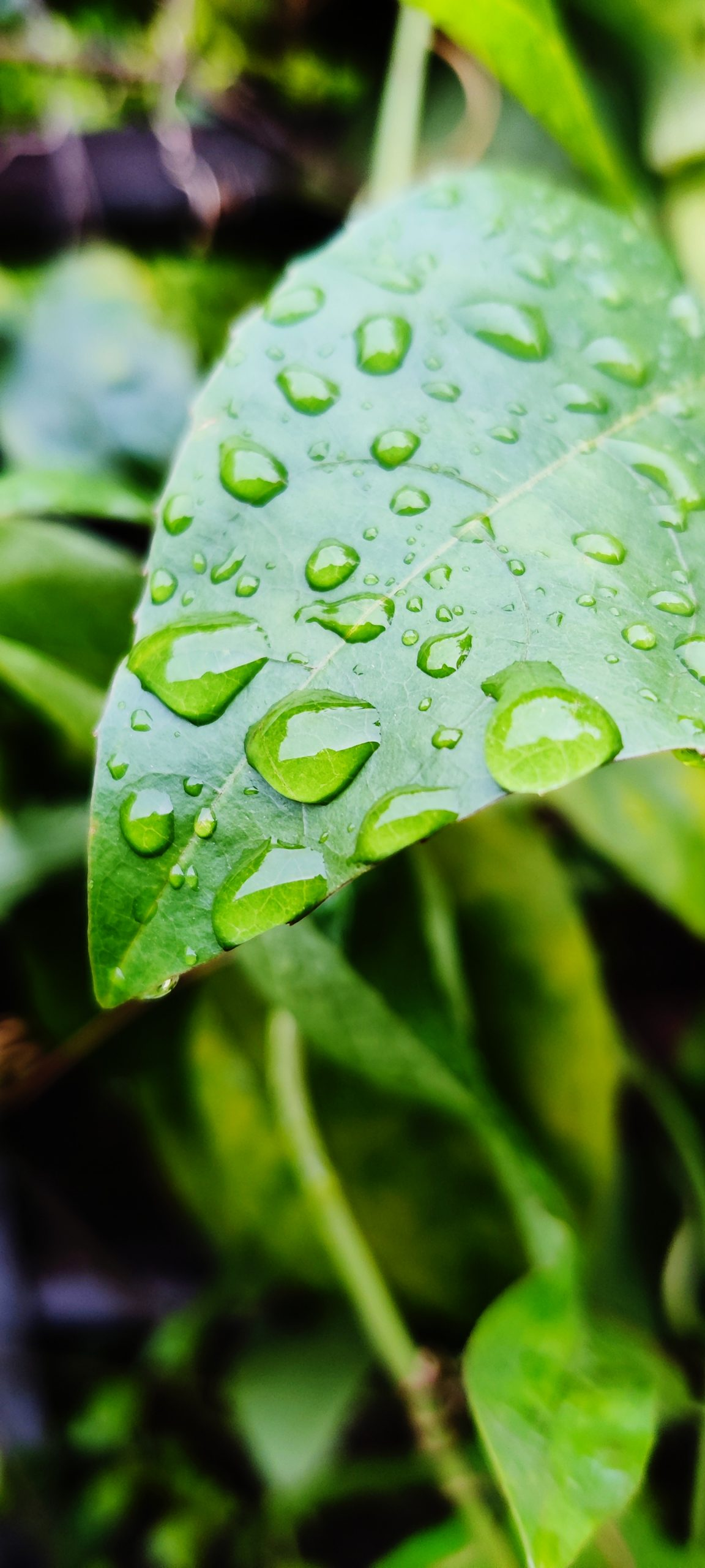 Tiny Waterdrops on leaf