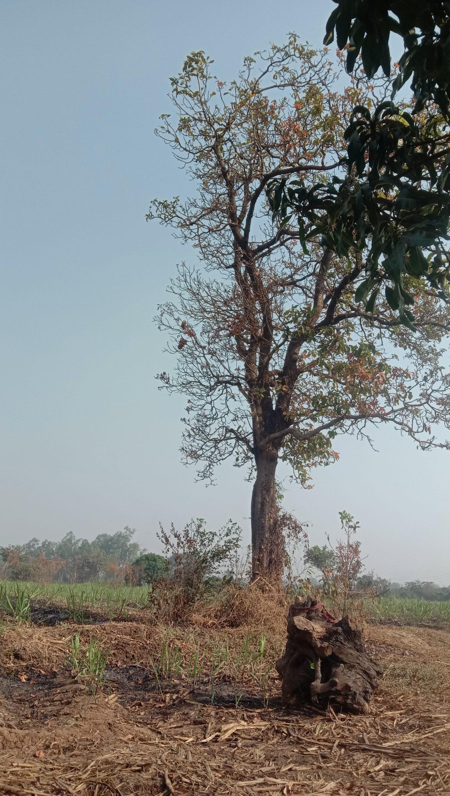 Tree in farm