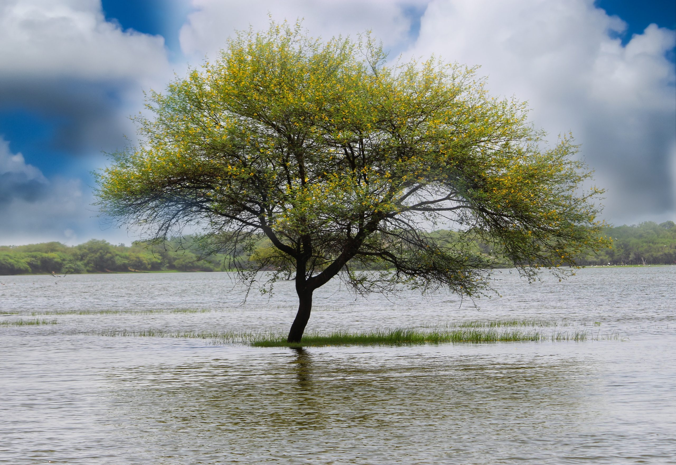 tree in the middle of lake