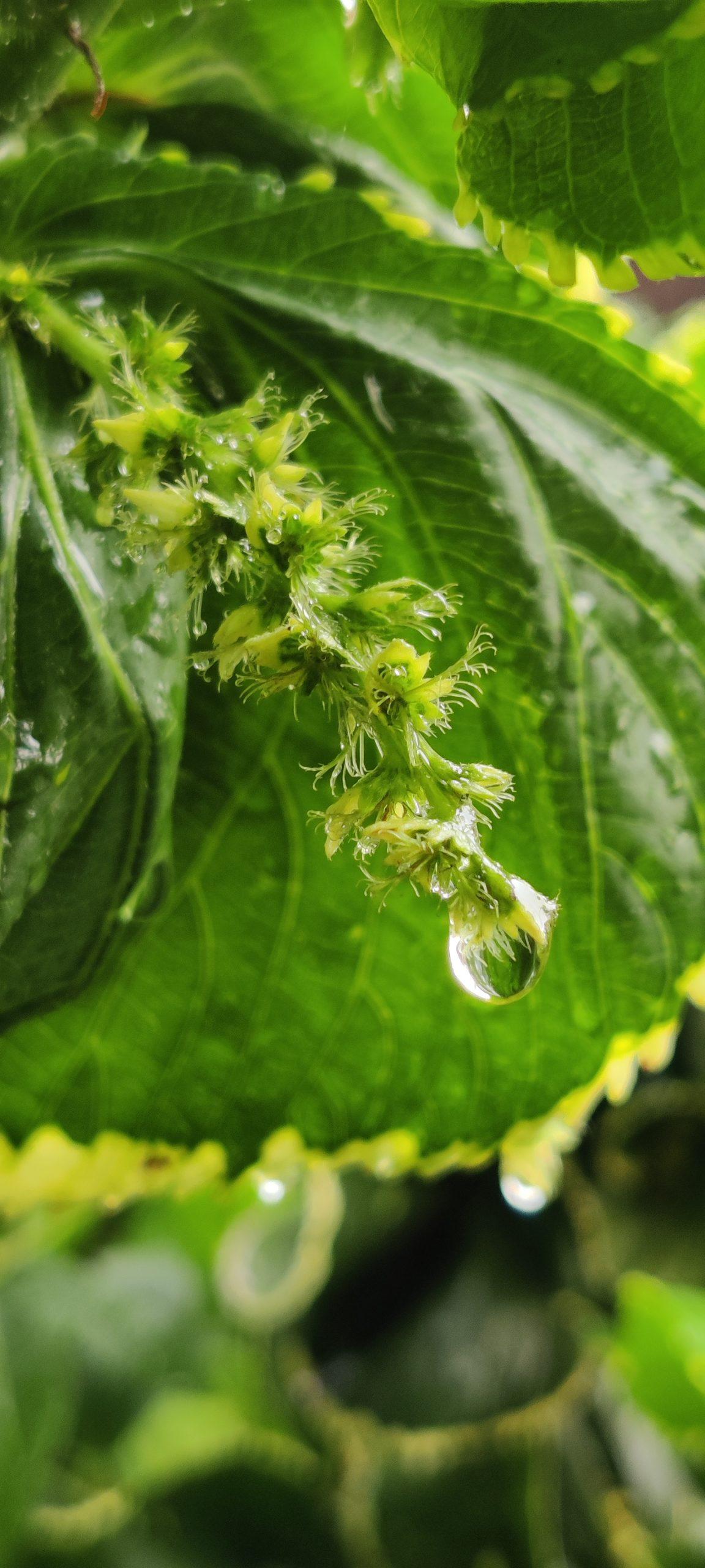 Water drop on a plant leaf