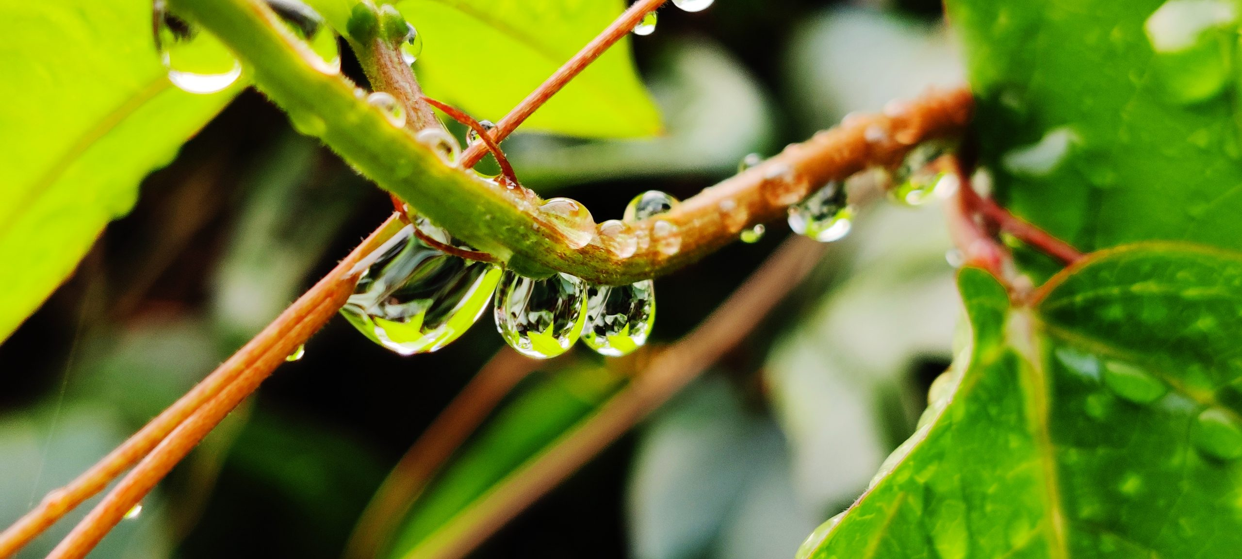 drops on a stem