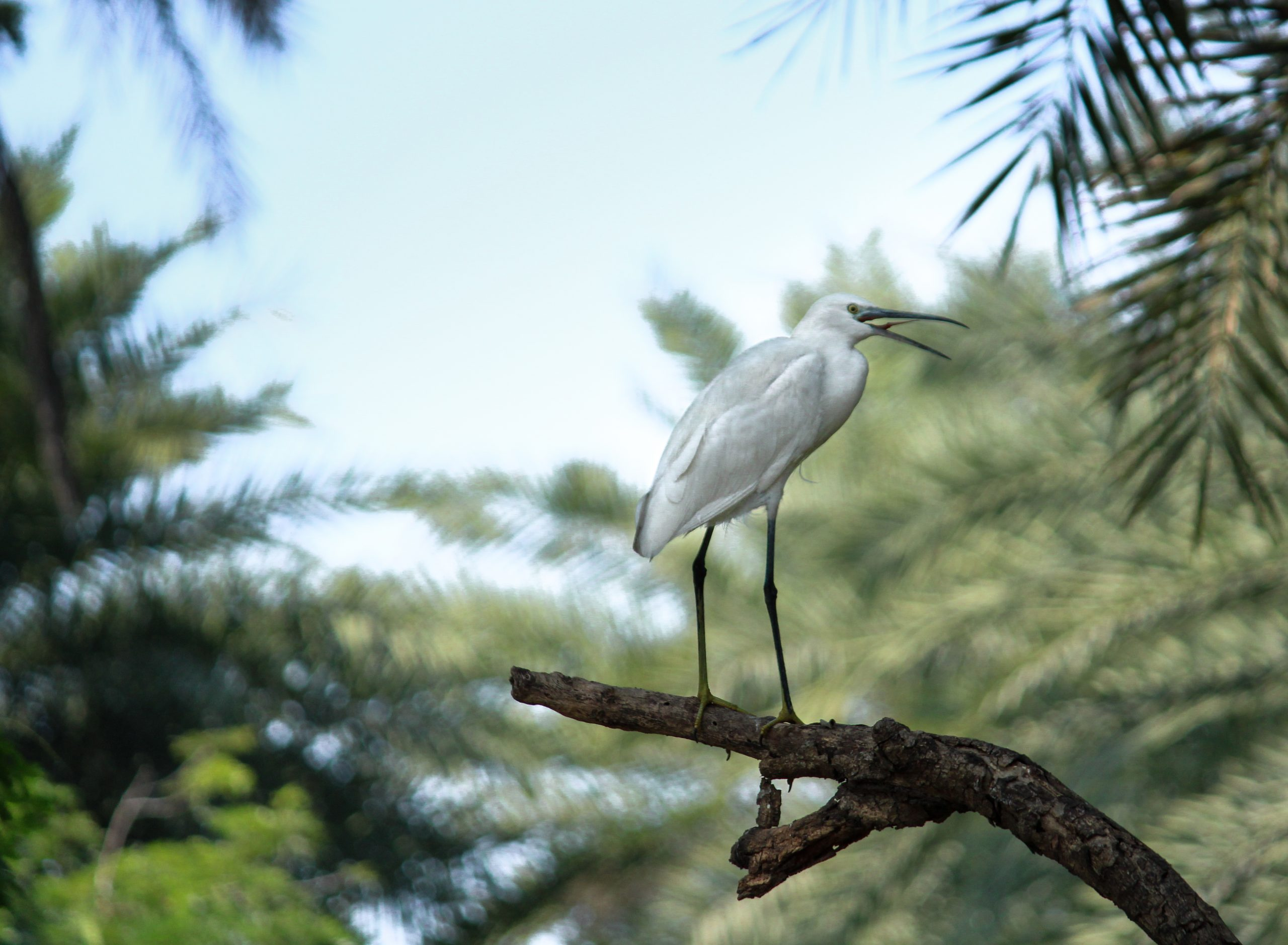 White bird sitting on the branch of tree