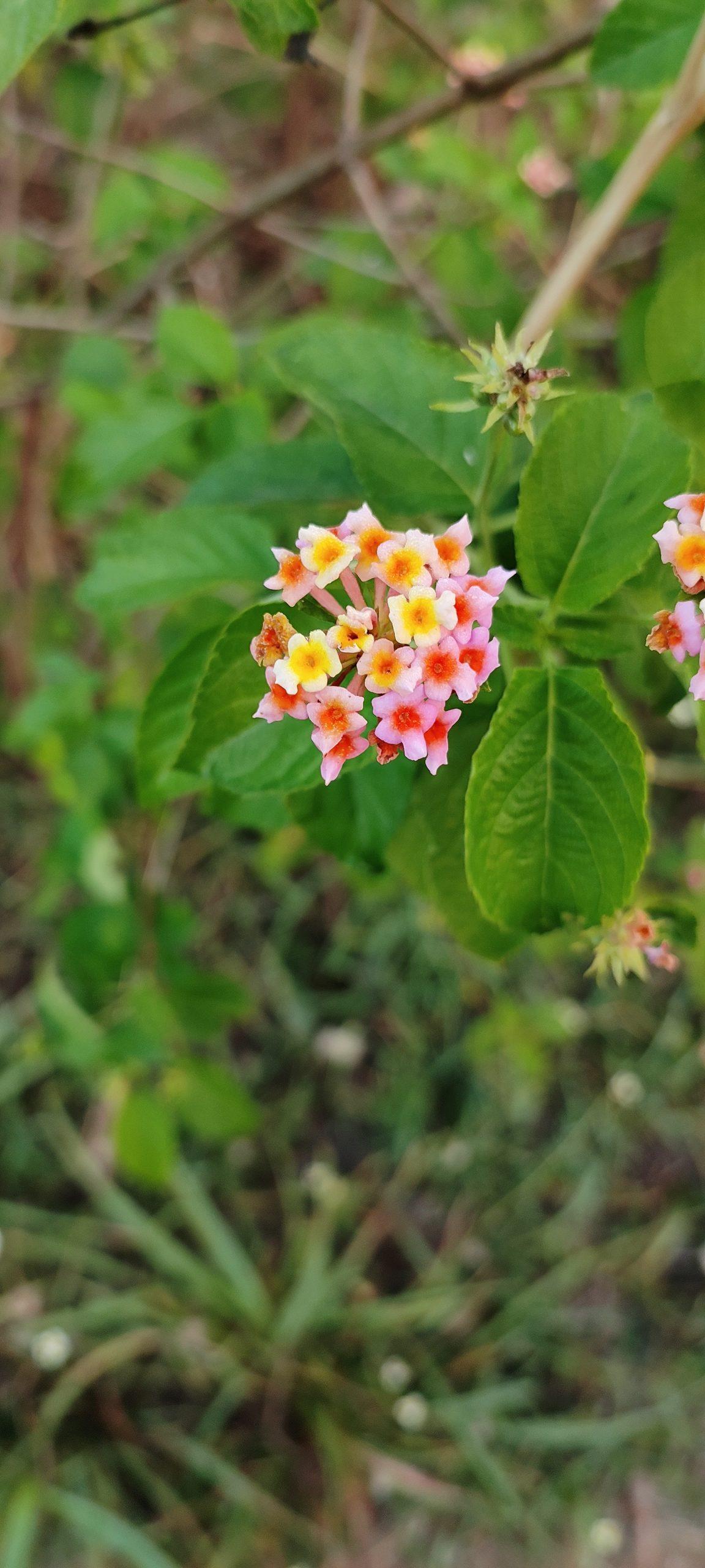 Wild flower on plant