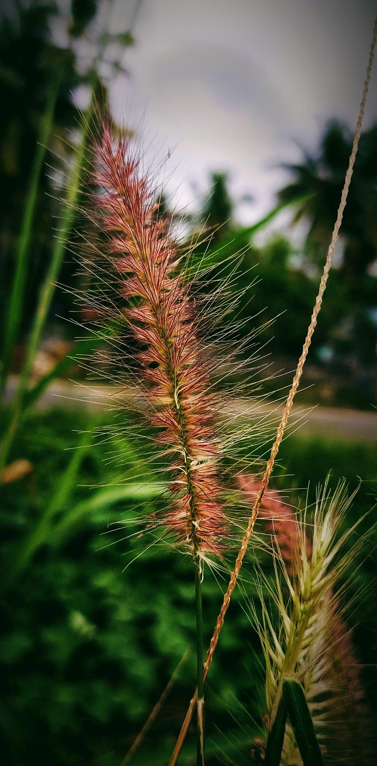 Wild grass macro view