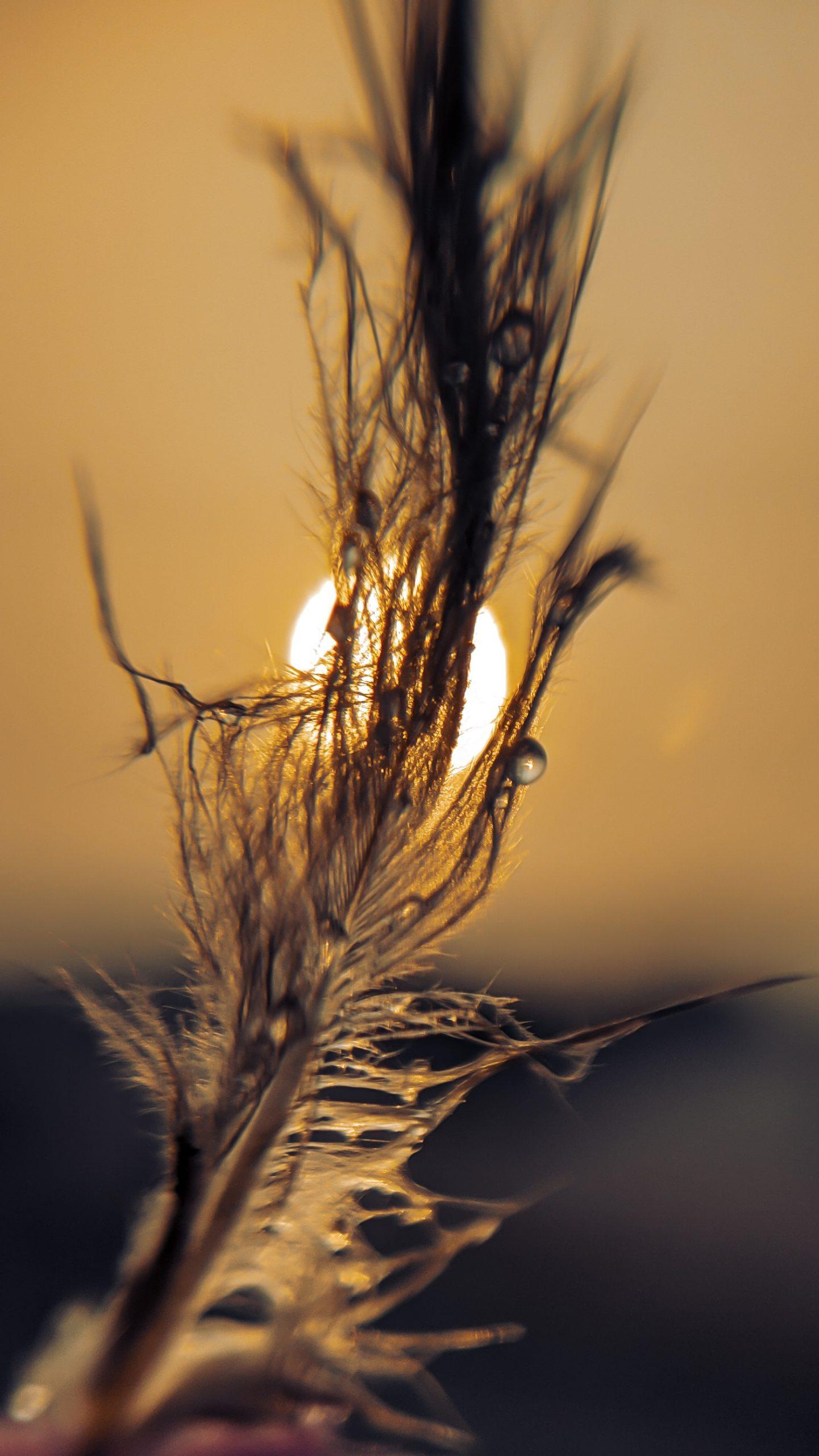 Wings hiding sun
