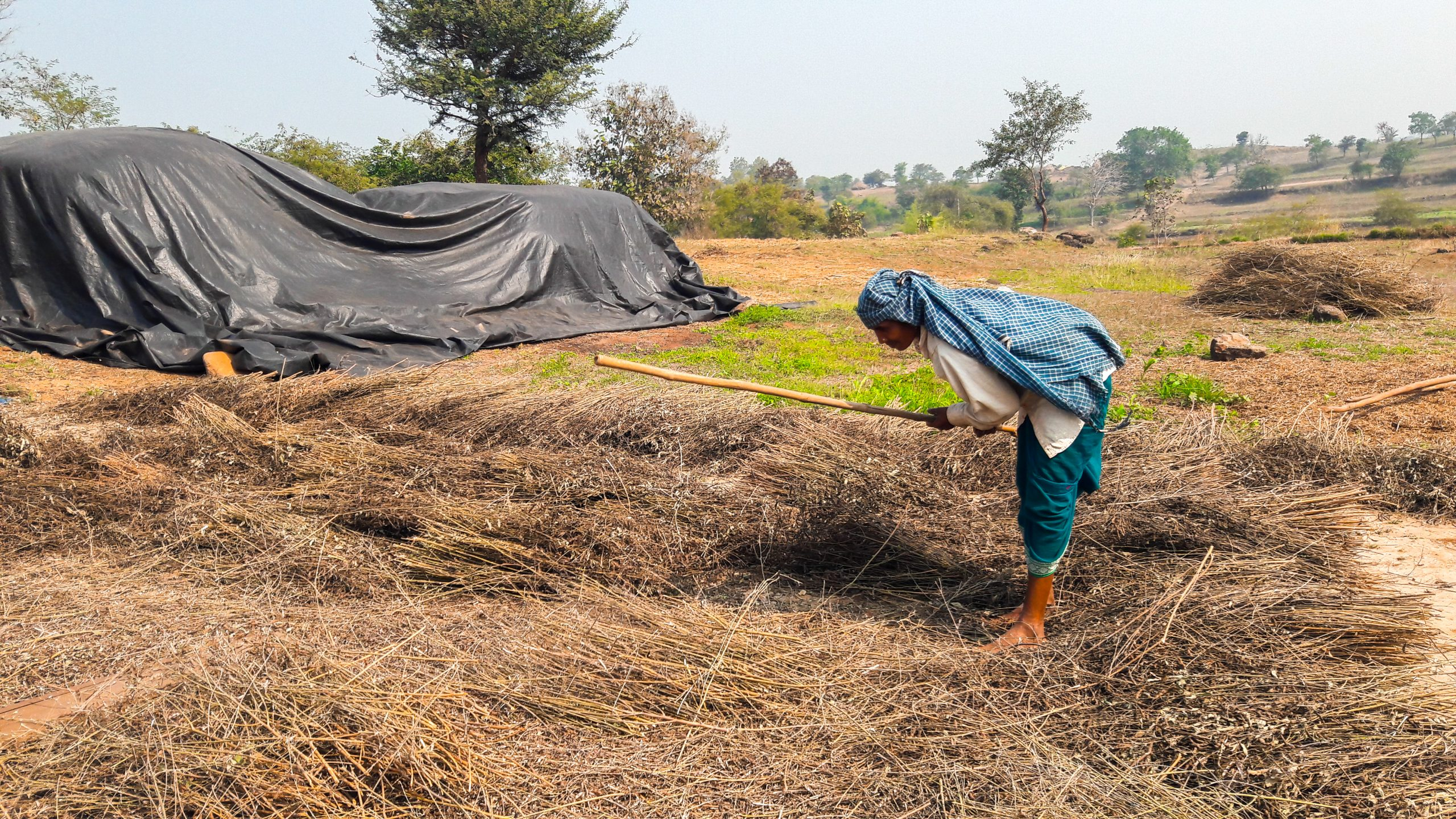 Woman working in the farm