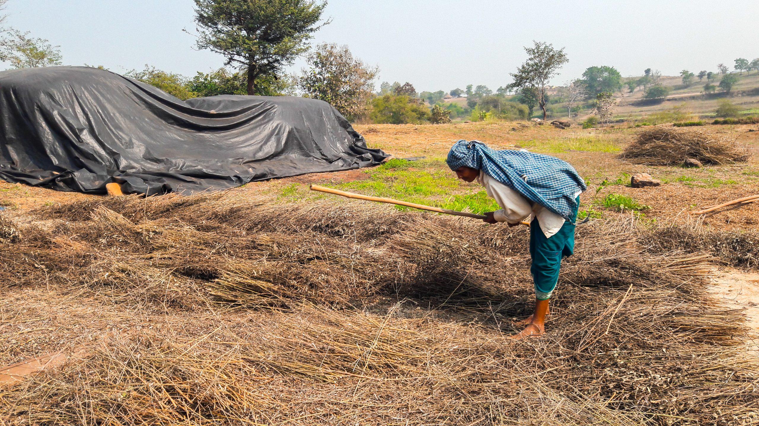 Woman working in the farm