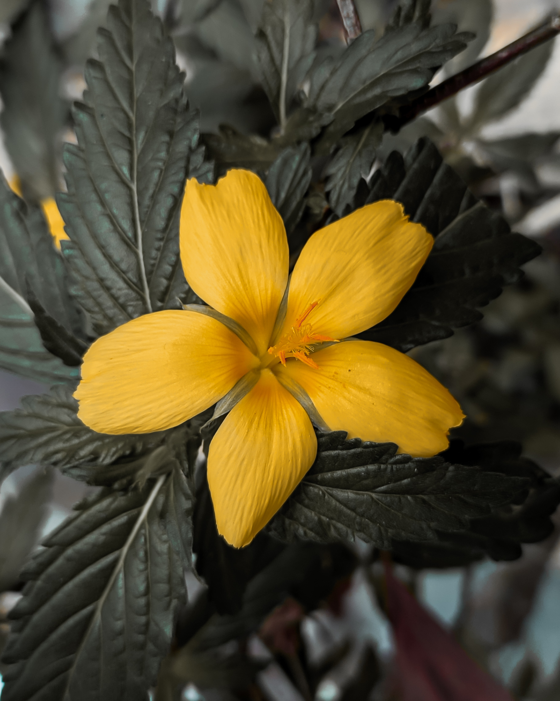 Yellow flower on plant