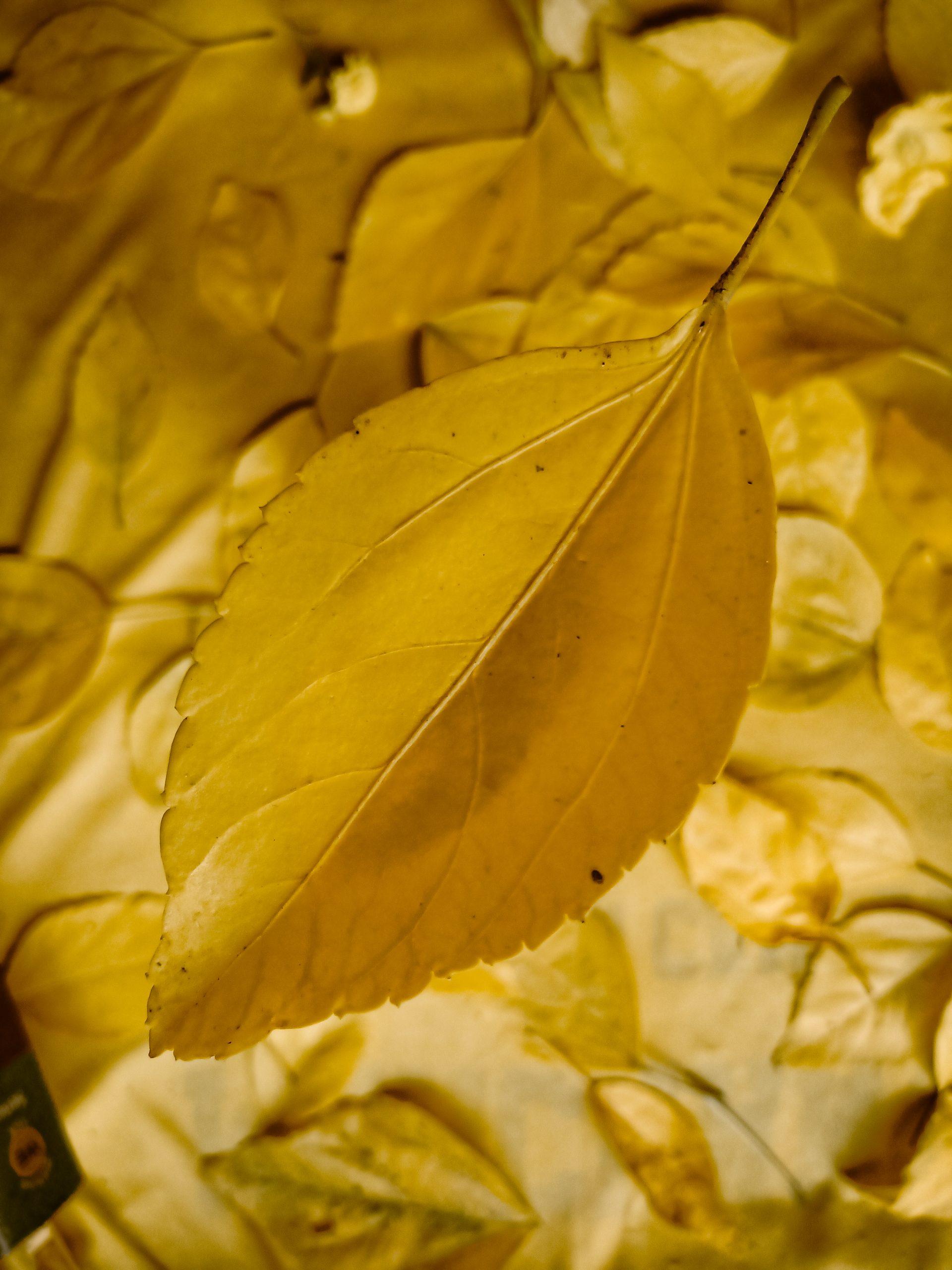 A foliage